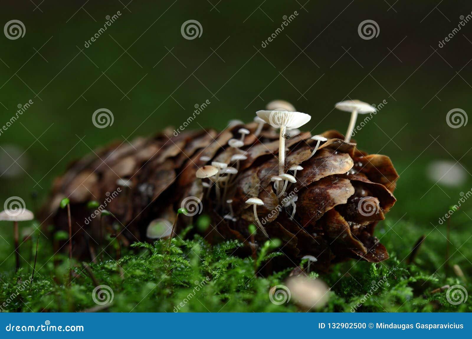 Cena do outono com grupo de cogumelos