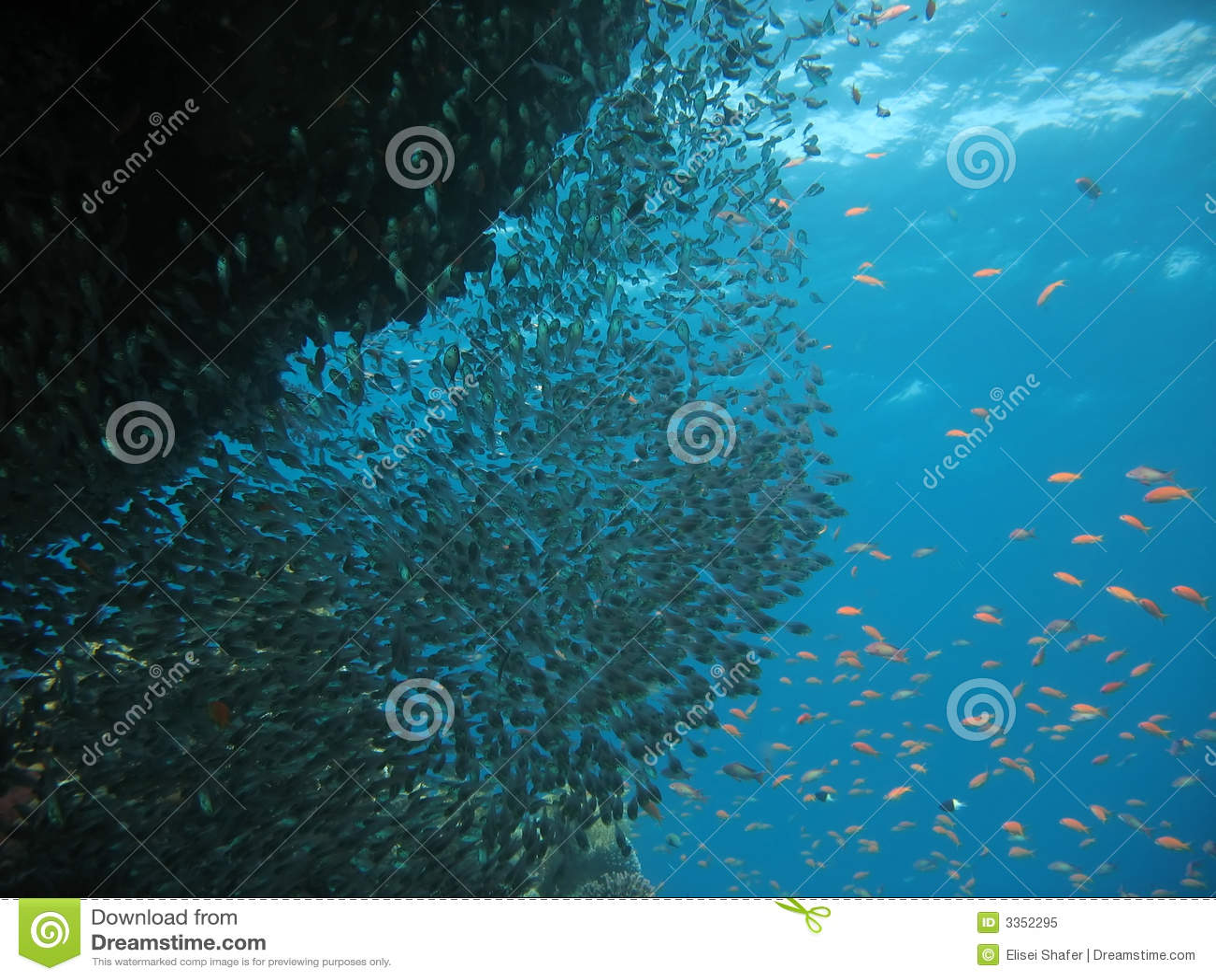 Cena do recife coral
