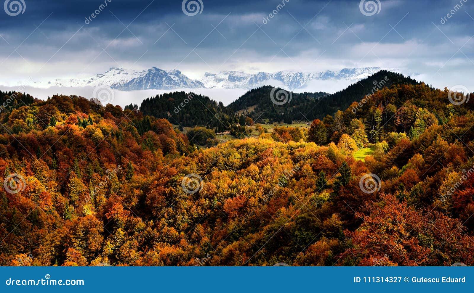 Cena em Romênia, paisagem bonita do inverno e do outono de montanhas Carpathian selvagens