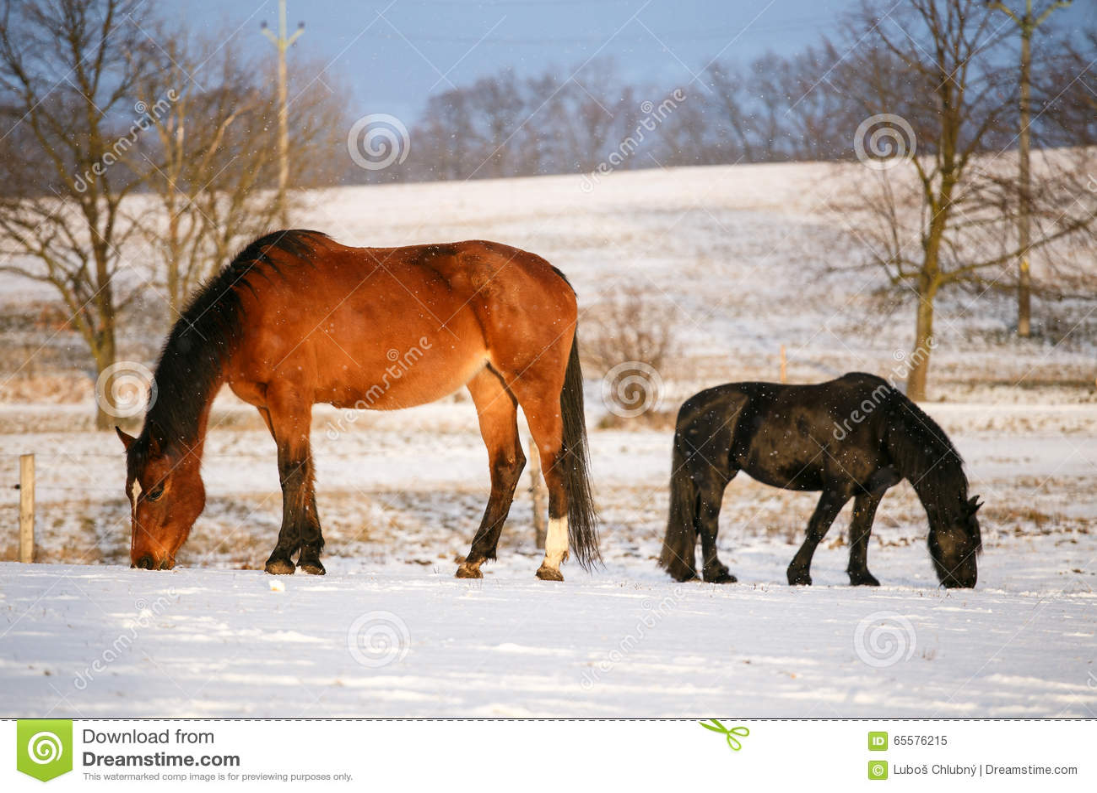 Cena rural com os dois cavalos na neve