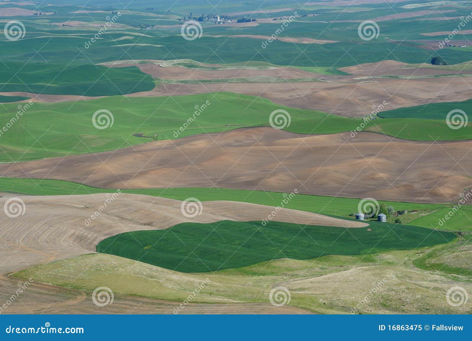 Cena rural do campo de trigo