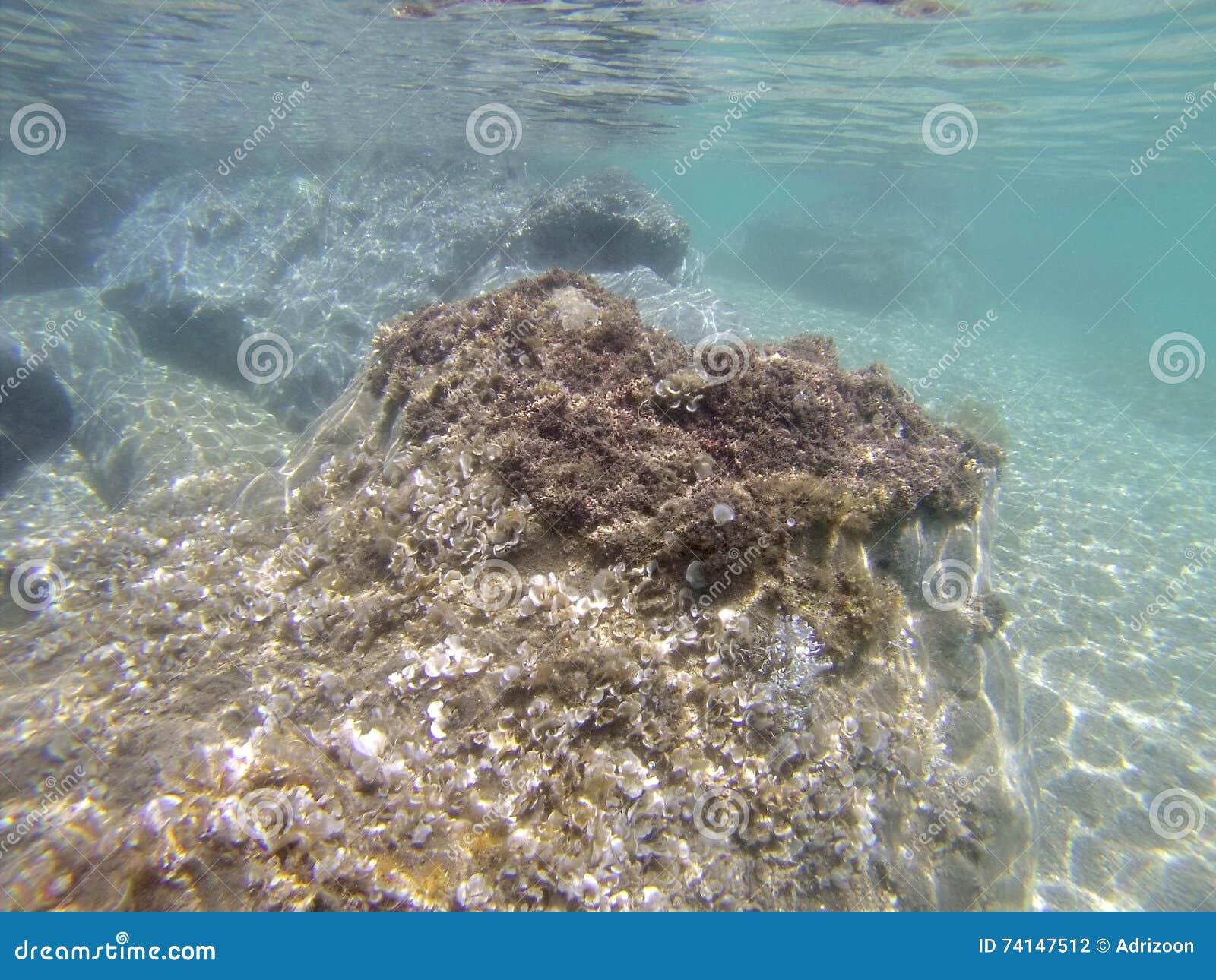 Cena subaquática, Pelion, Grécia
