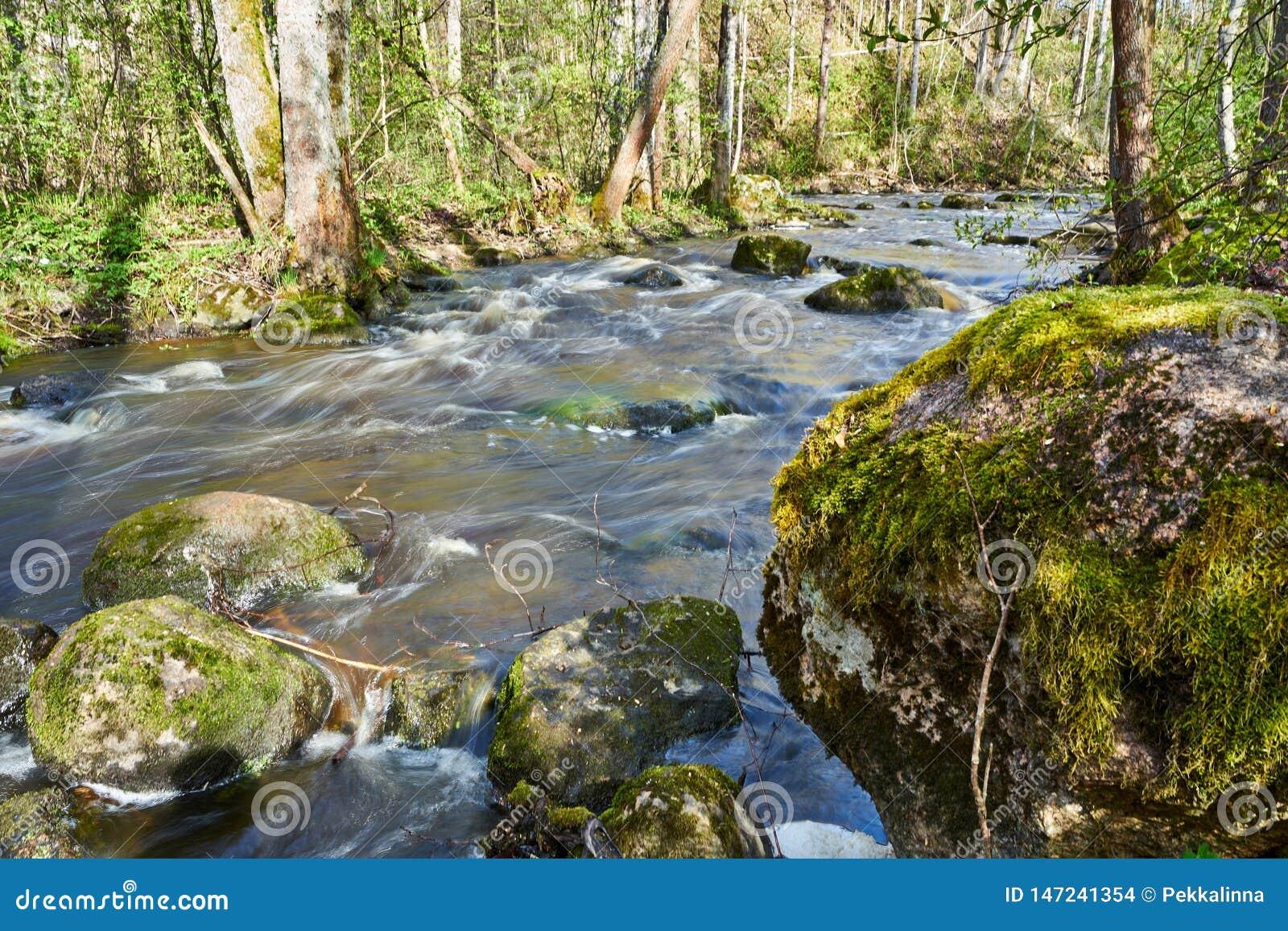 Cena temperamental calma do rio na floresta no tempo de mola
