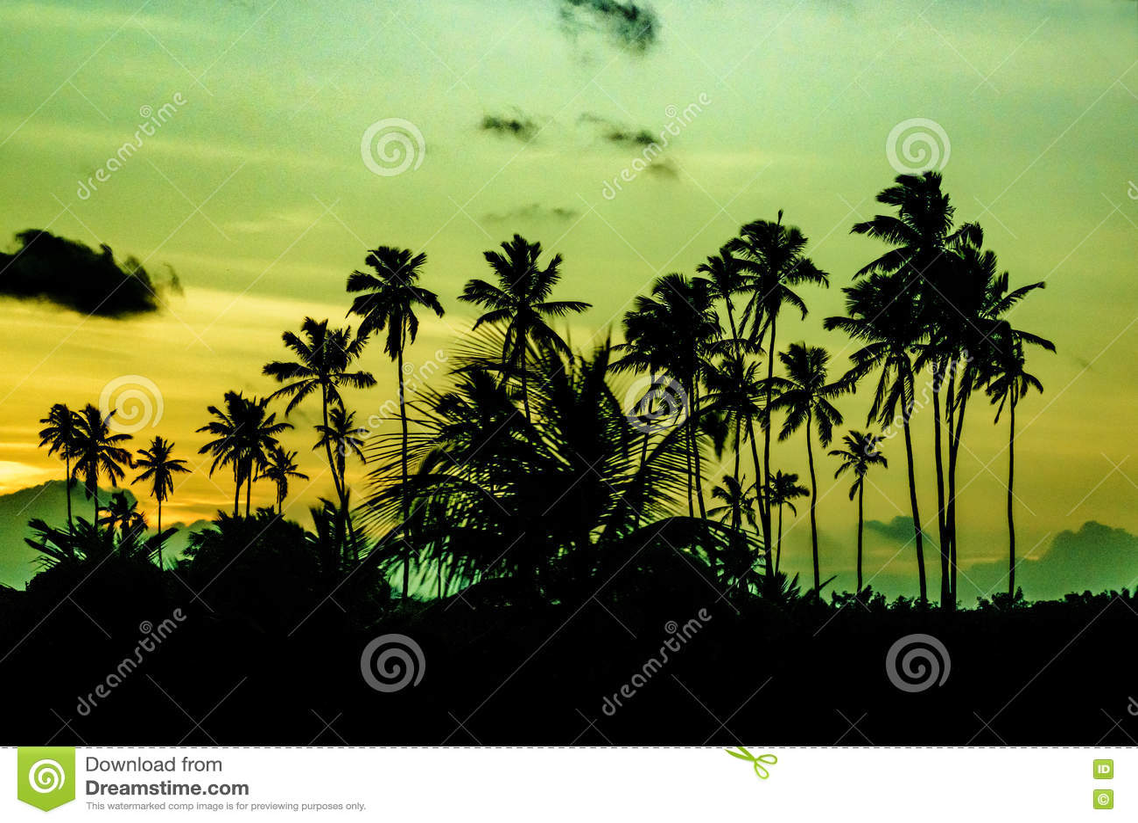 Cena tropical Portho Gallinhas Brasil do por do sol