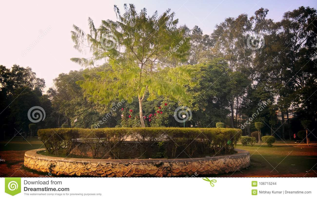 Center Tree On Rose Garden Ludhiana Stock Photo - Image of ...