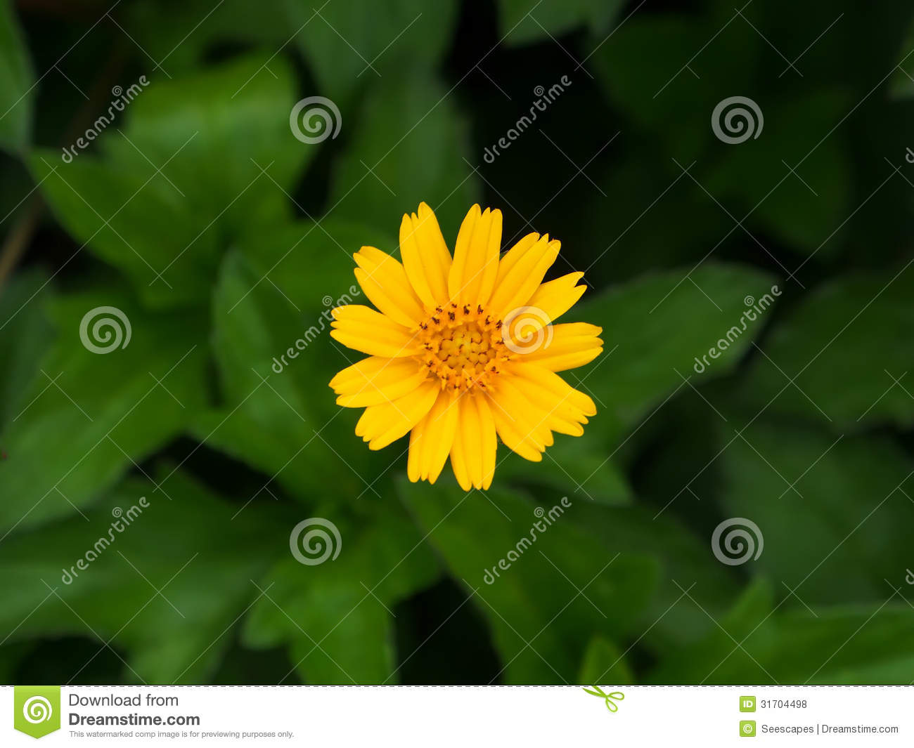 Center Yellow Flower Stock Photo Image Of Flora Plant 31704498