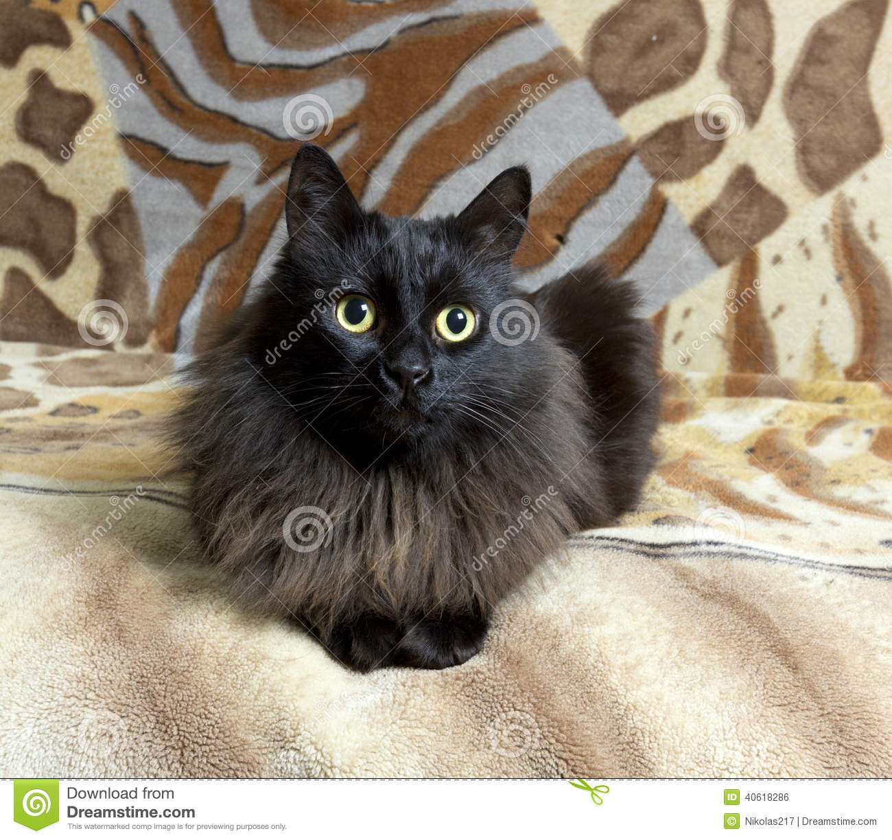 Centered cat stock photo  Image of definition, energy - 40618286