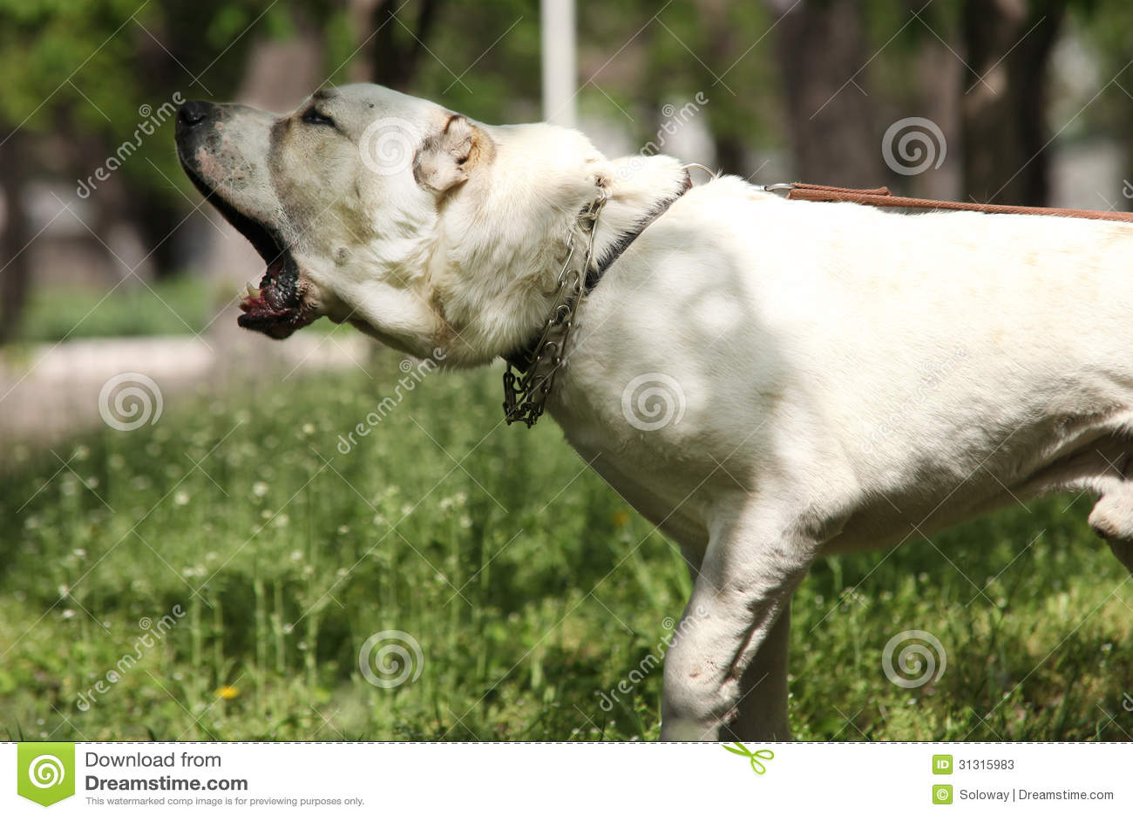 Central Bark Dog Training