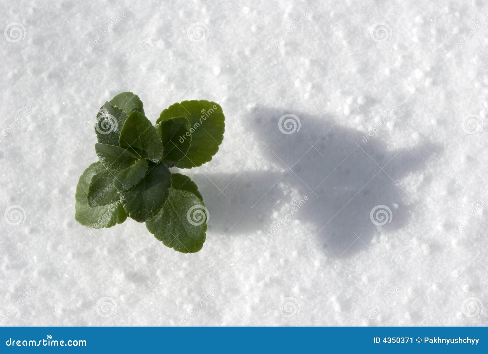 Centrale dans la neige