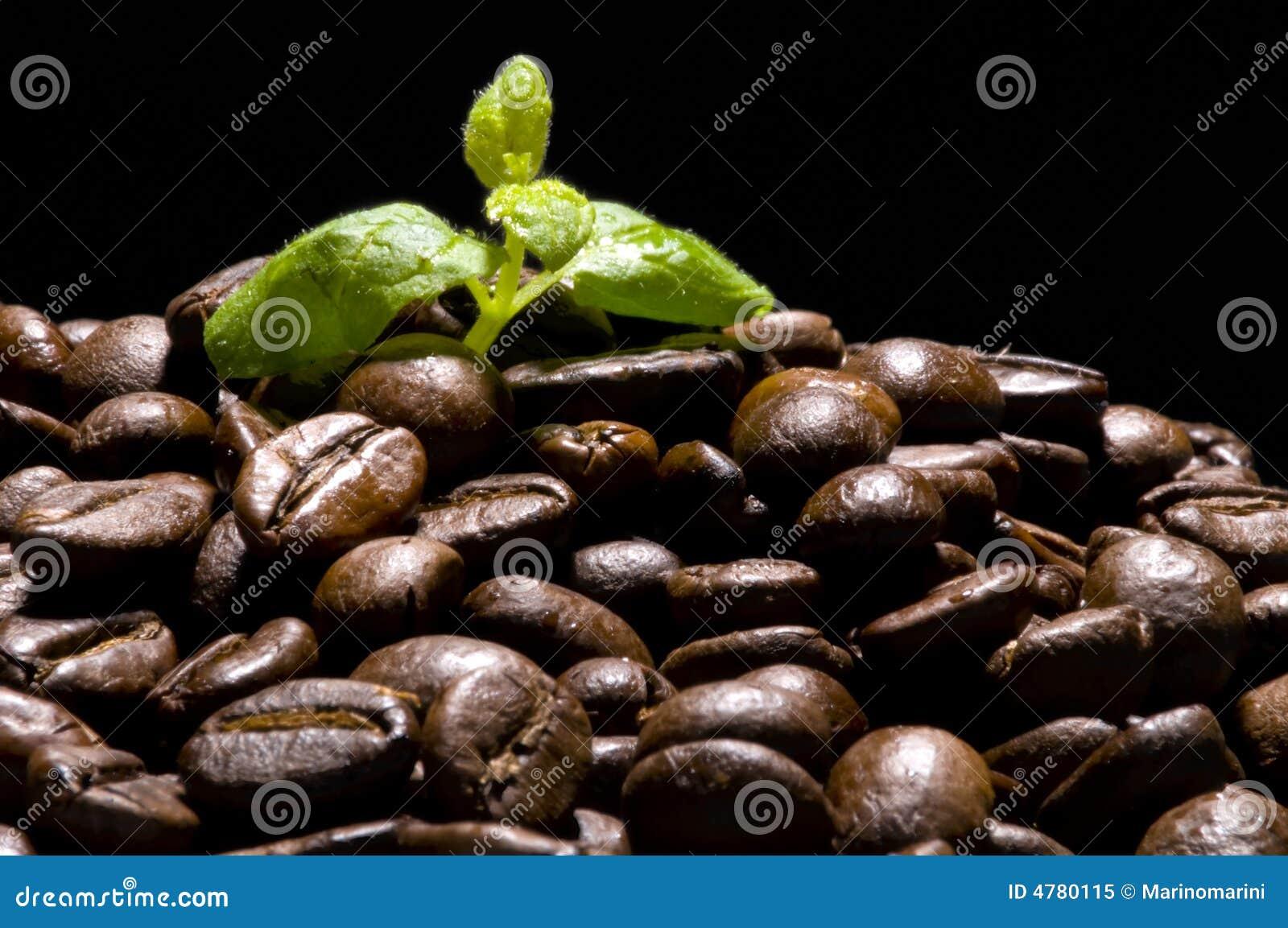 Centrale de café