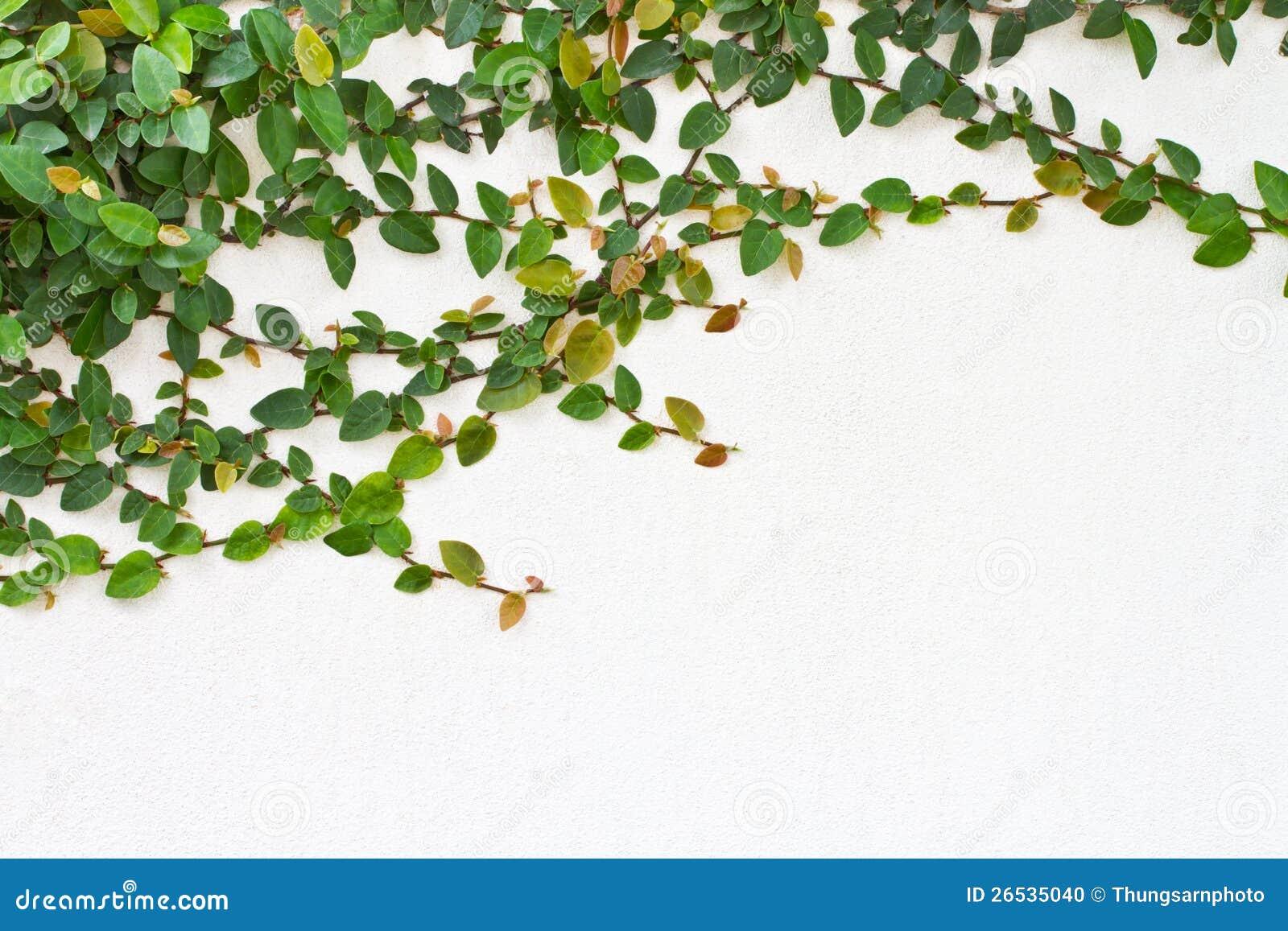 centrale verte de plante grimpante photo stock image. Black Bedroom Furniture Sets. Home Design Ideas
