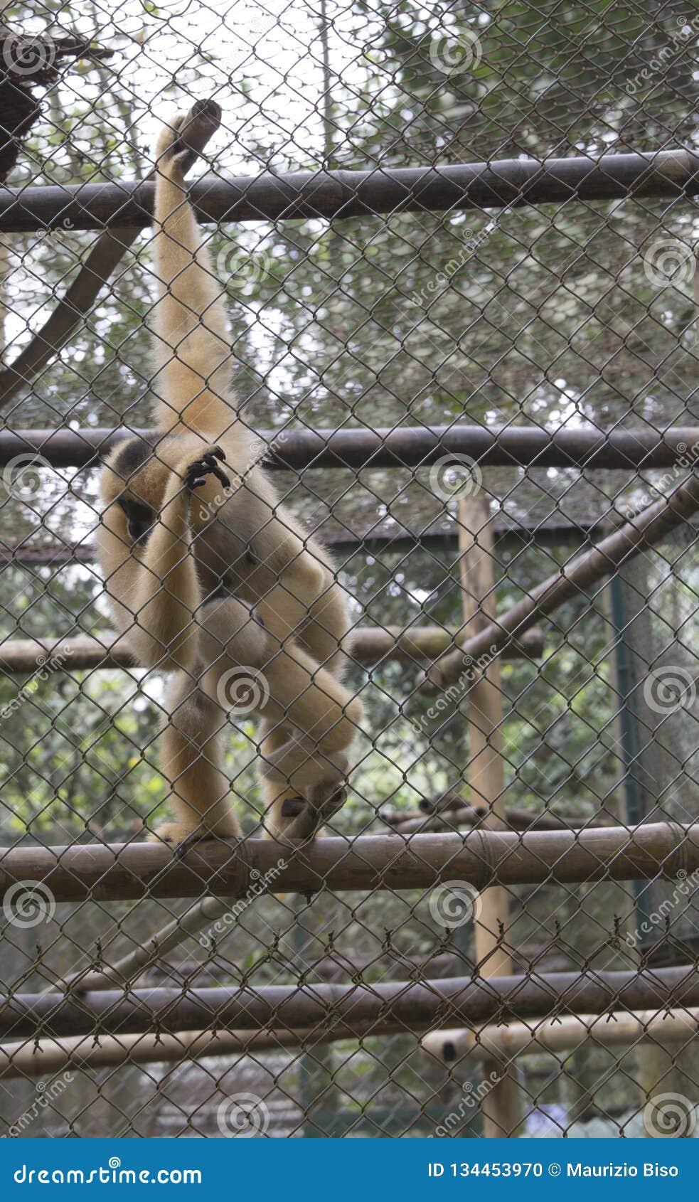 Centre de délivrance pour des primats