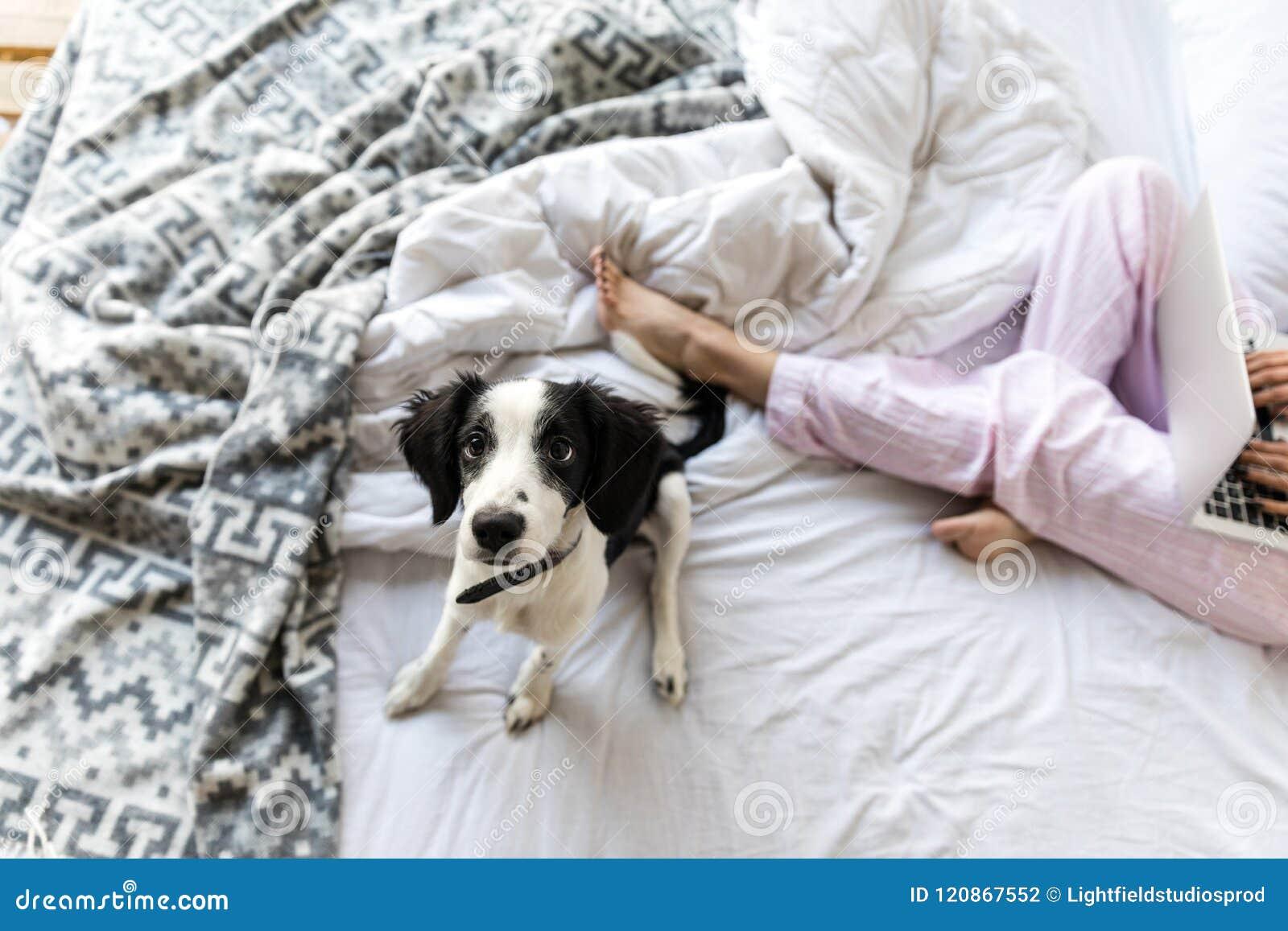 Centre sélectif du chiot noir et blanc mignon se reposant sur le lit près de la femme