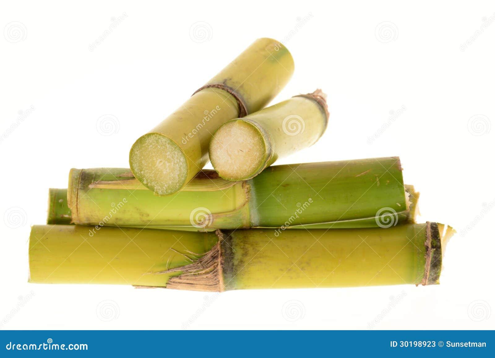 Ceppi della canna da zucchero