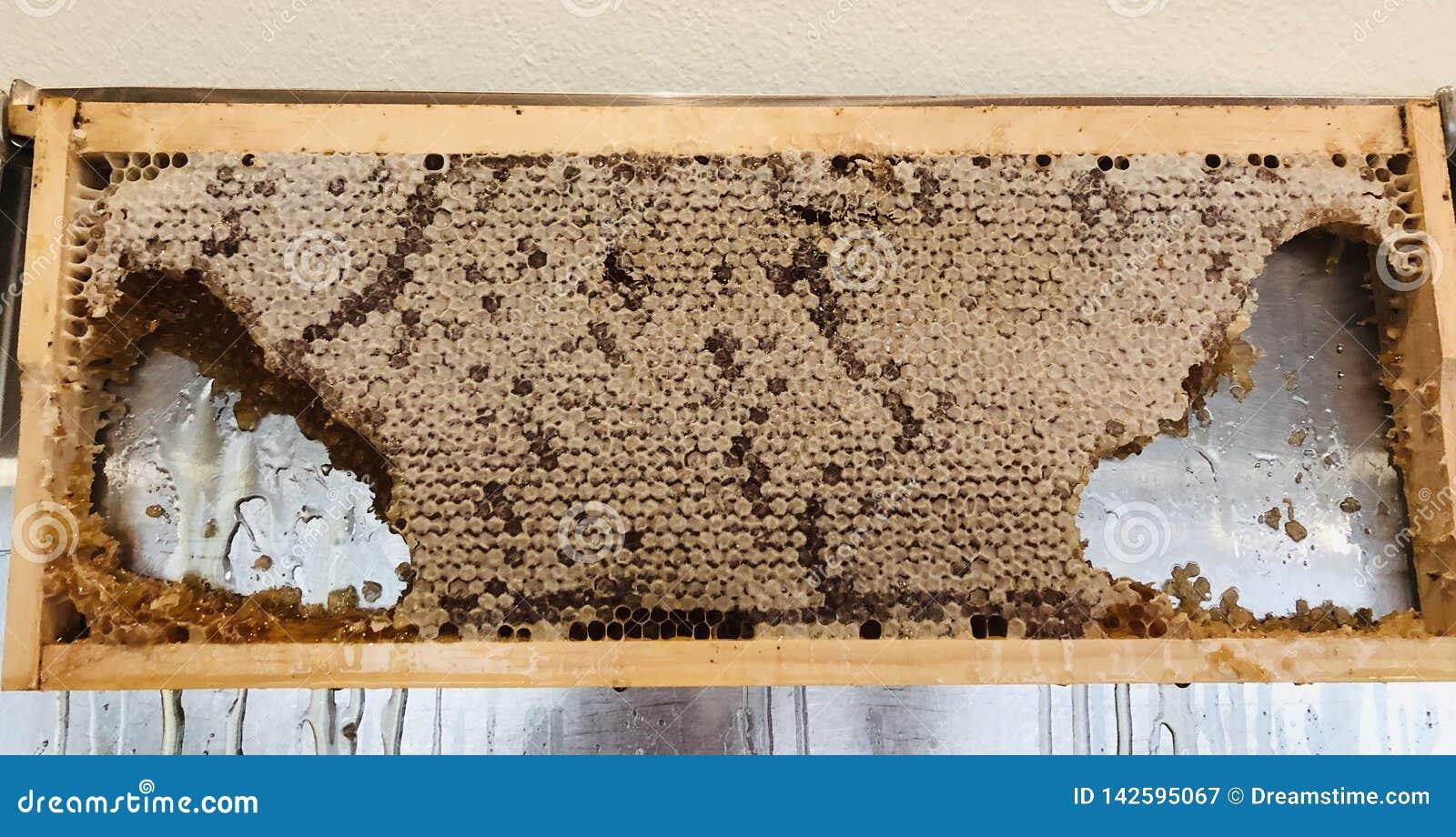 Cera comestible de la miel