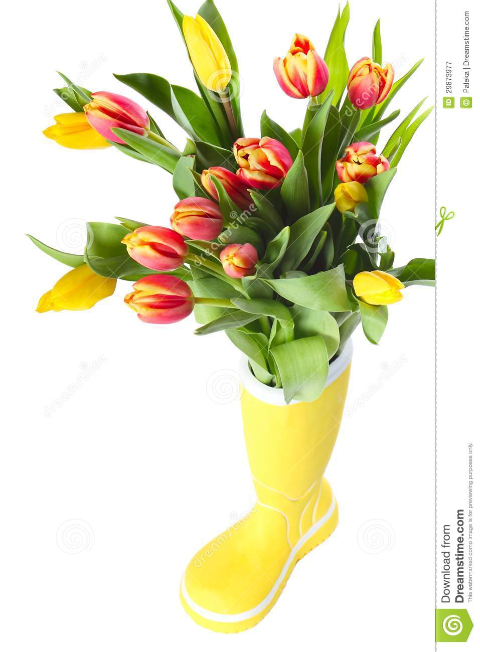 Boot with tulips stock image image of nature garden 29873977 royalty free stock photo reviewsmspy