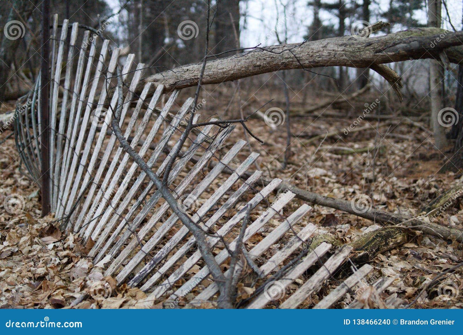 Cerca da floresta que inclina-se e que cai