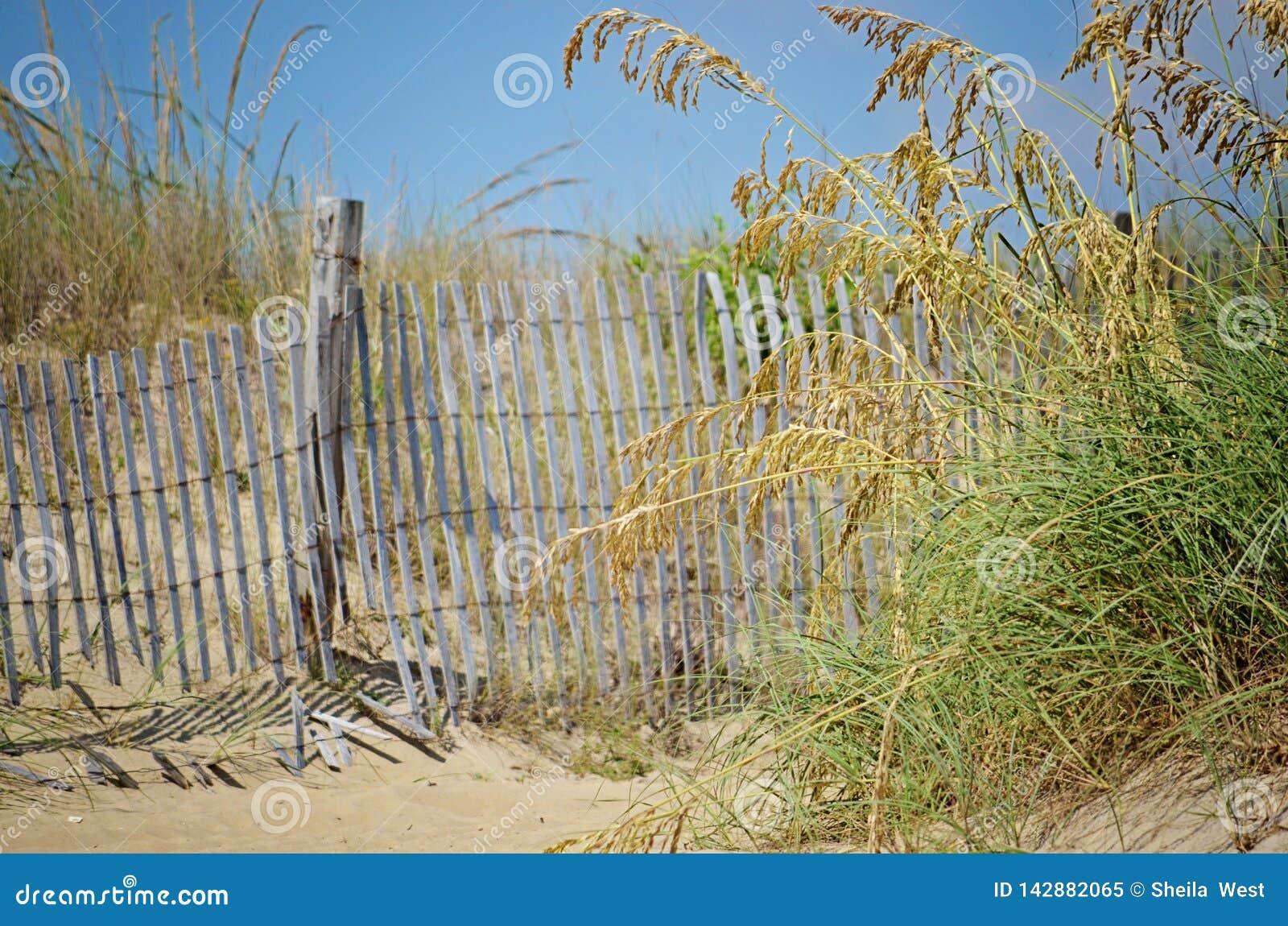Cerca da praia na grama do mar
