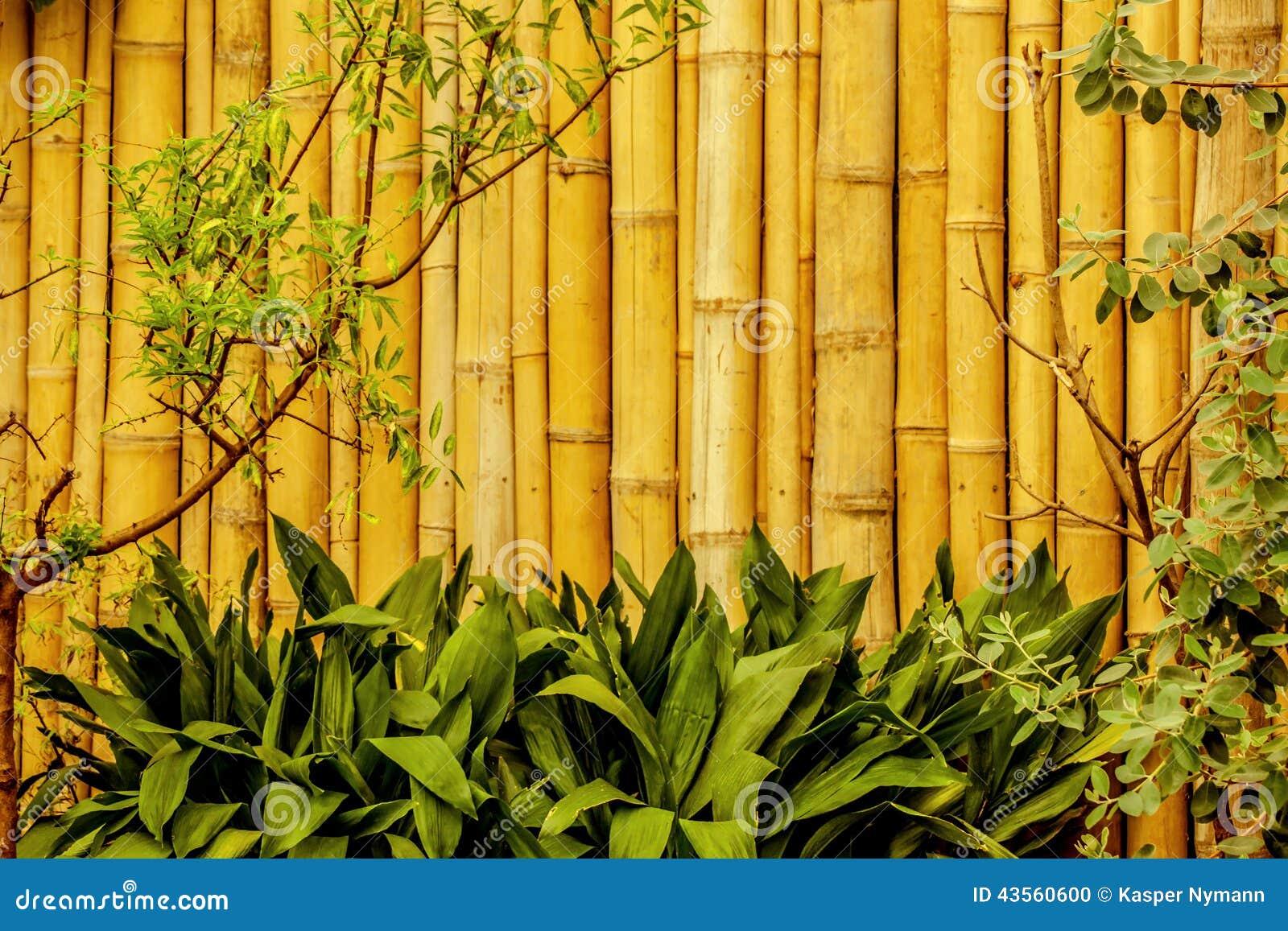 Bambu para jardin consejos prcticos sobre sistemas de - Bambu para jardin ...