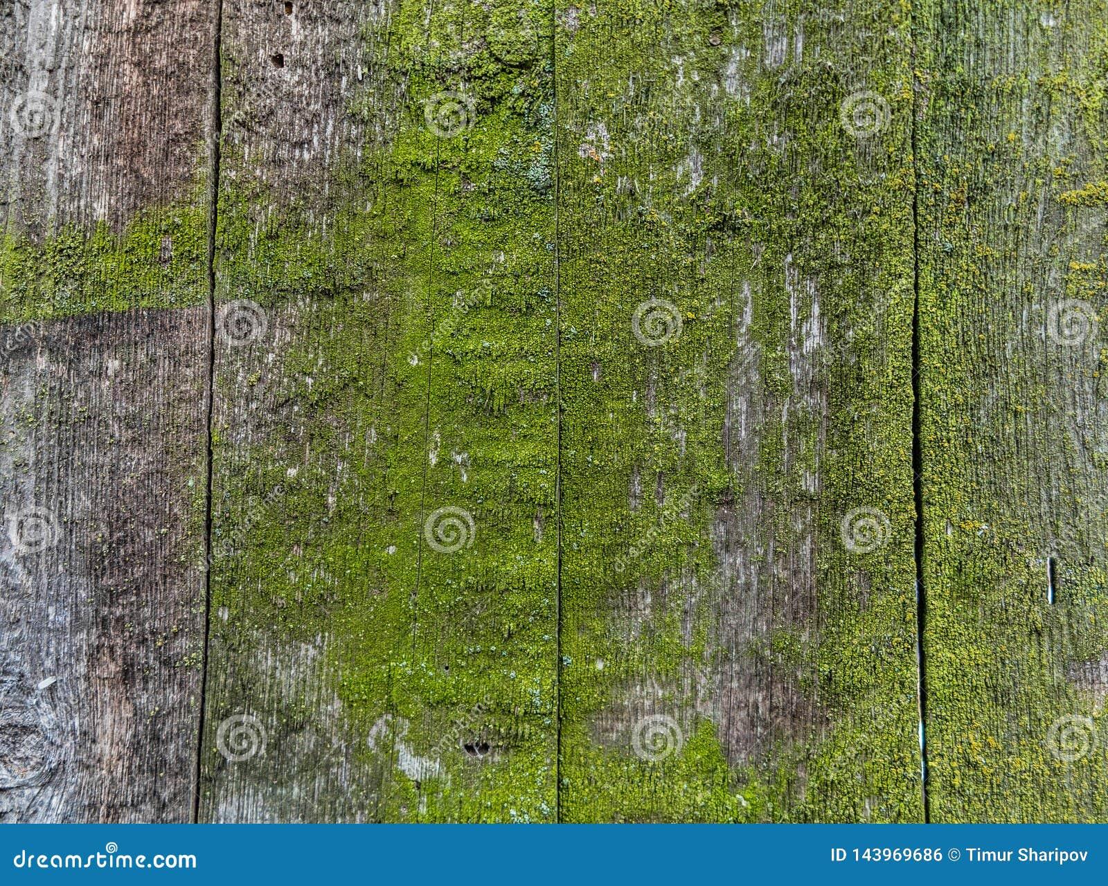 Cerca de madera con el musgo verde