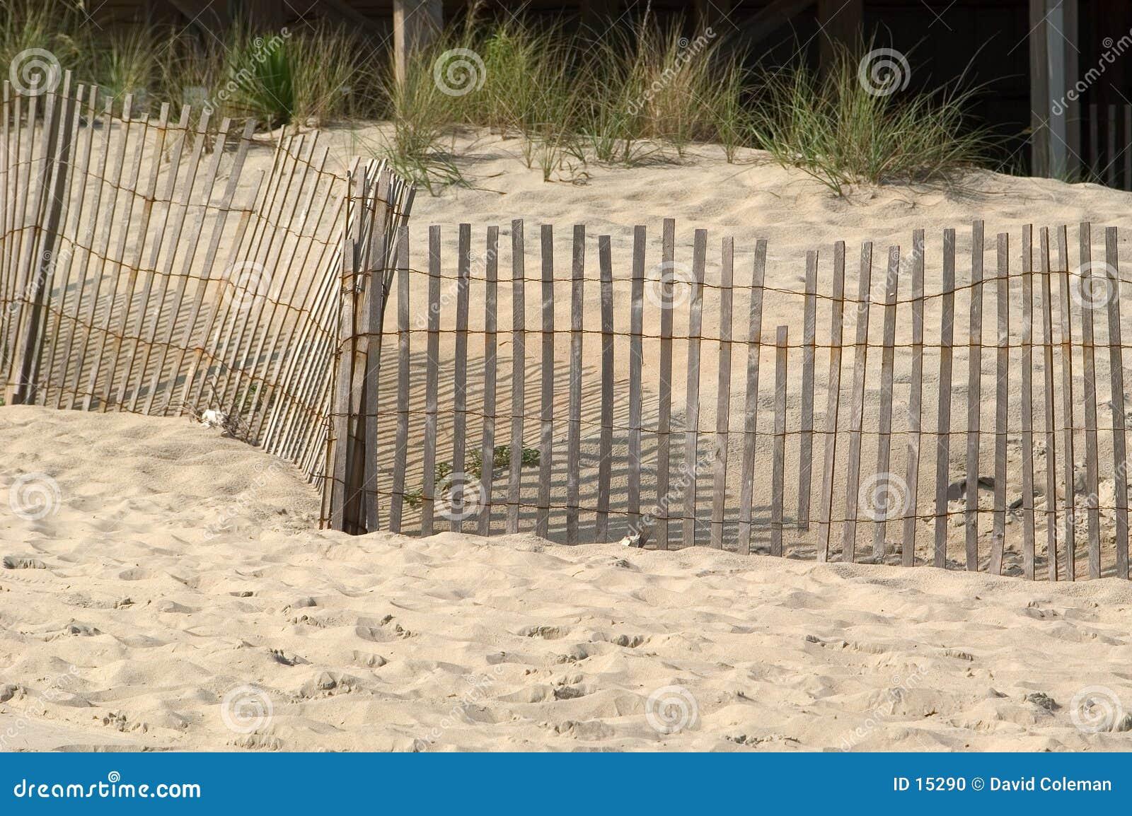 Cerca en las dunas