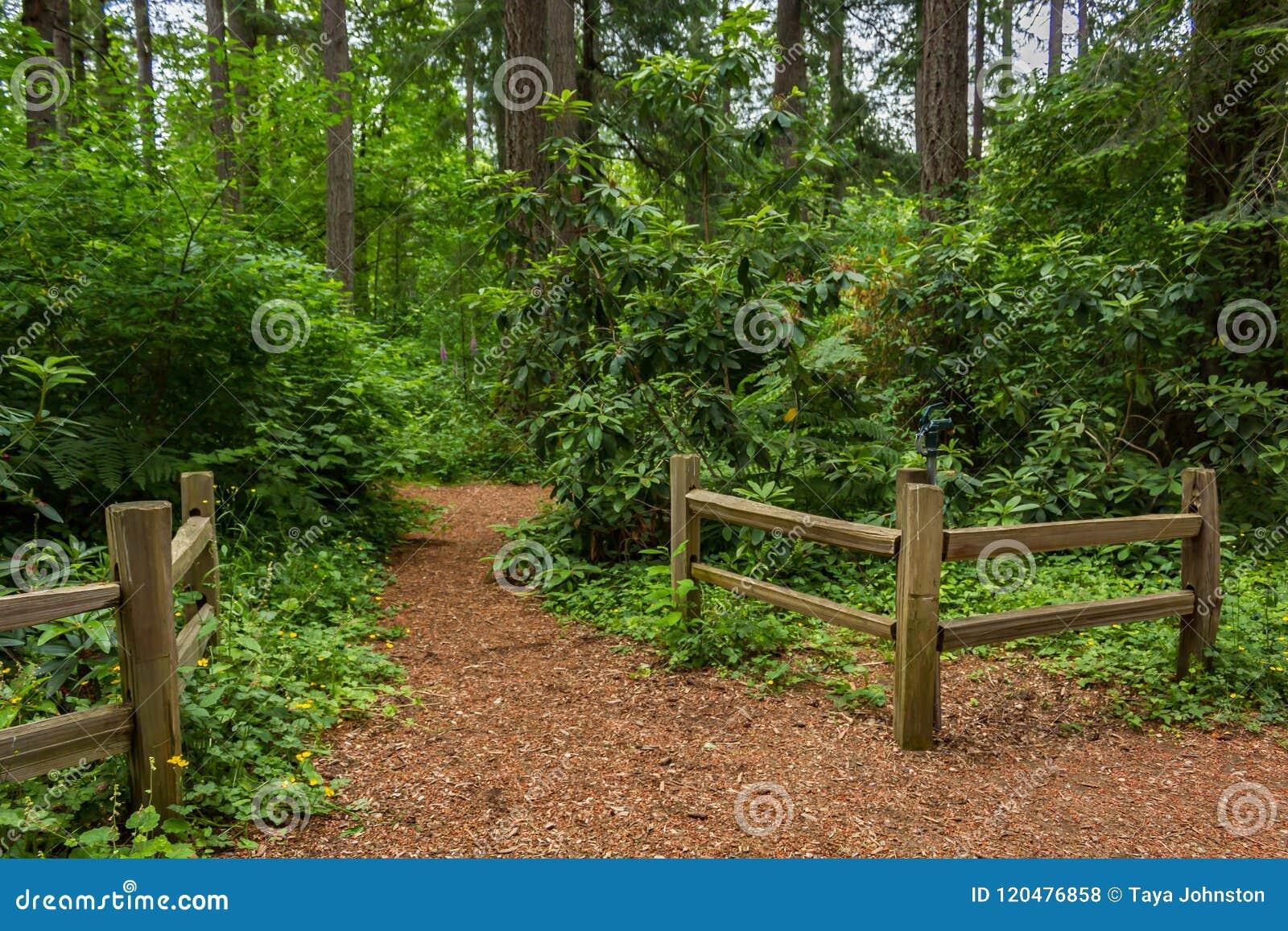 Cercas al lado de una trayectoria de la suciedad en el bosque