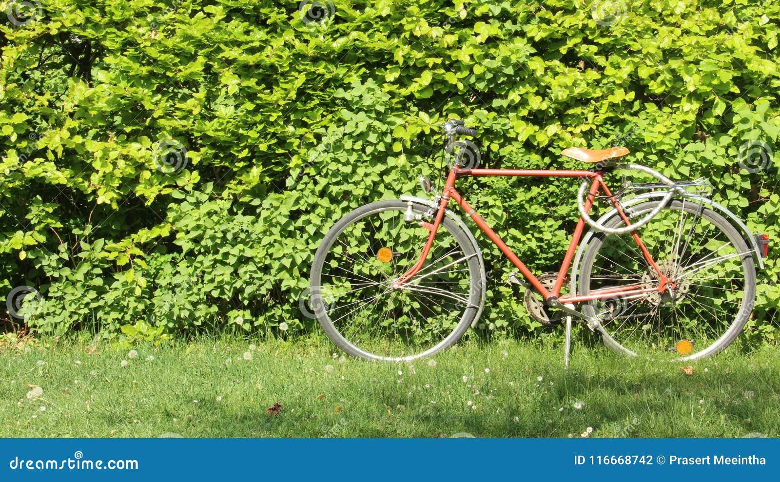 Cercas da árvore com a uma bicicleta velha