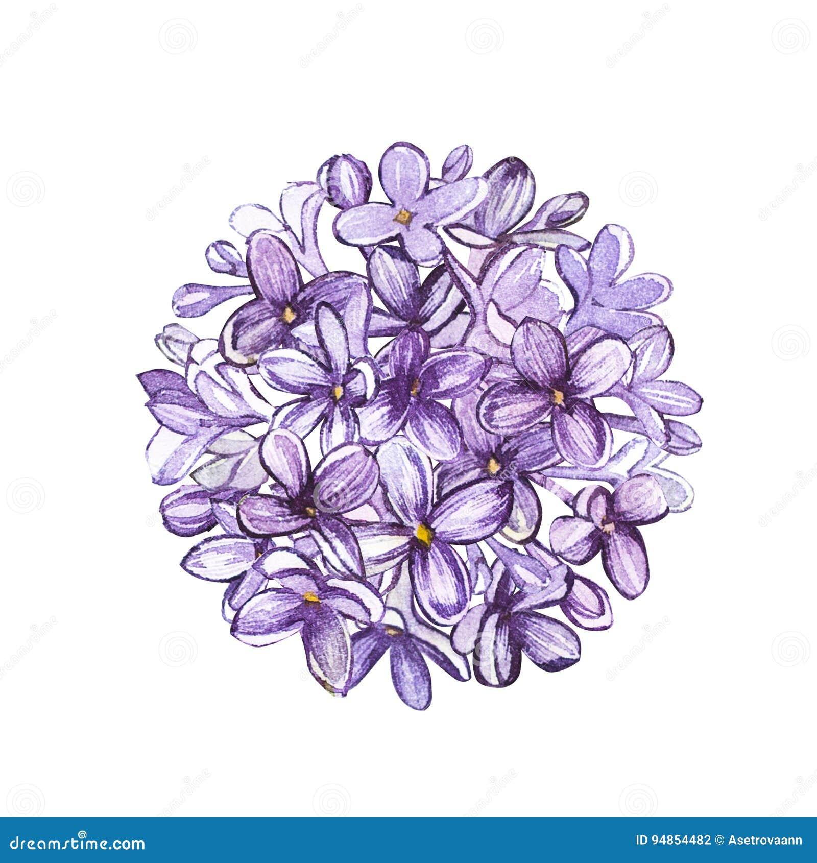 cercle de lilas de fleur d'aquarelle art de tatouage ou conception