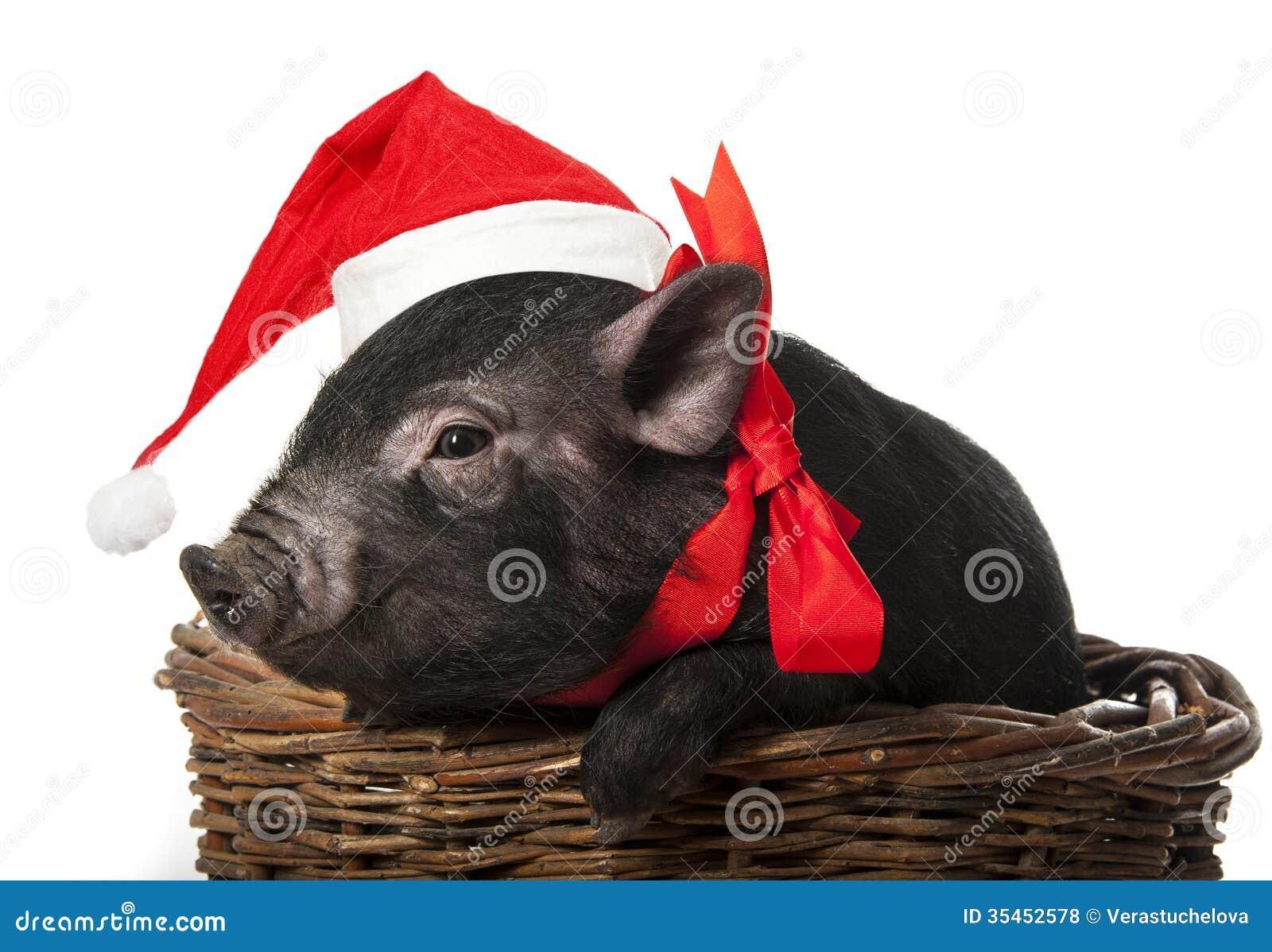 Cerdo negro con un casquillo rojo de santa