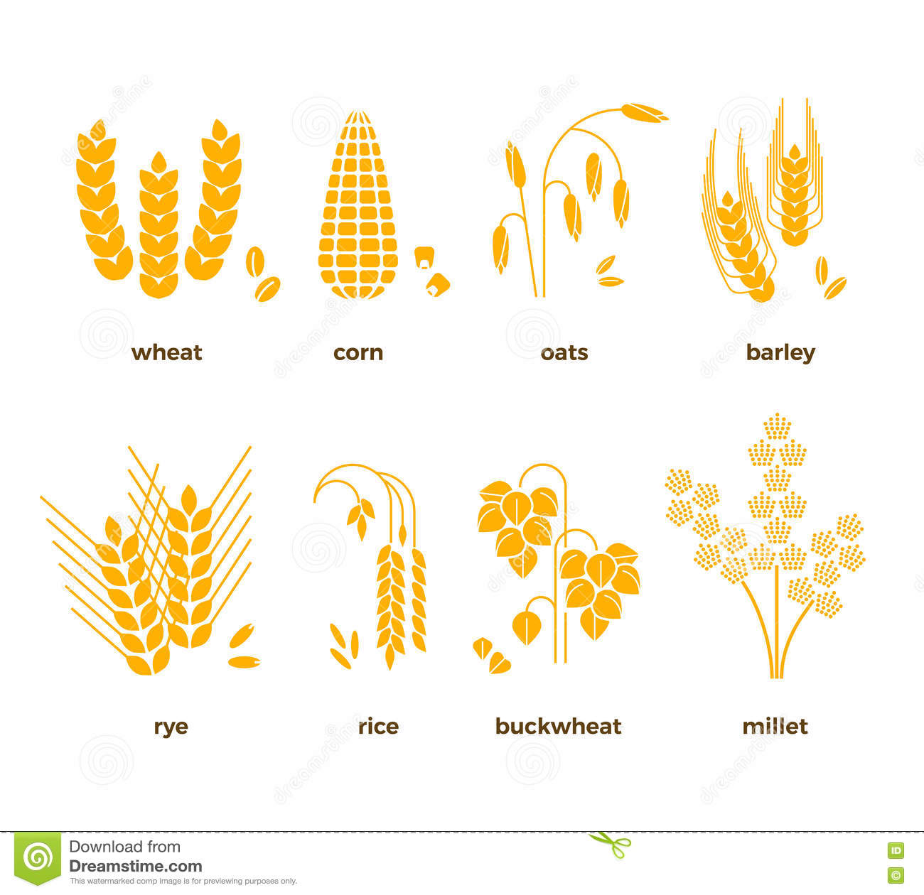 Oats Cereal Grain Diagram - Electrical Work Wiring Diagram •