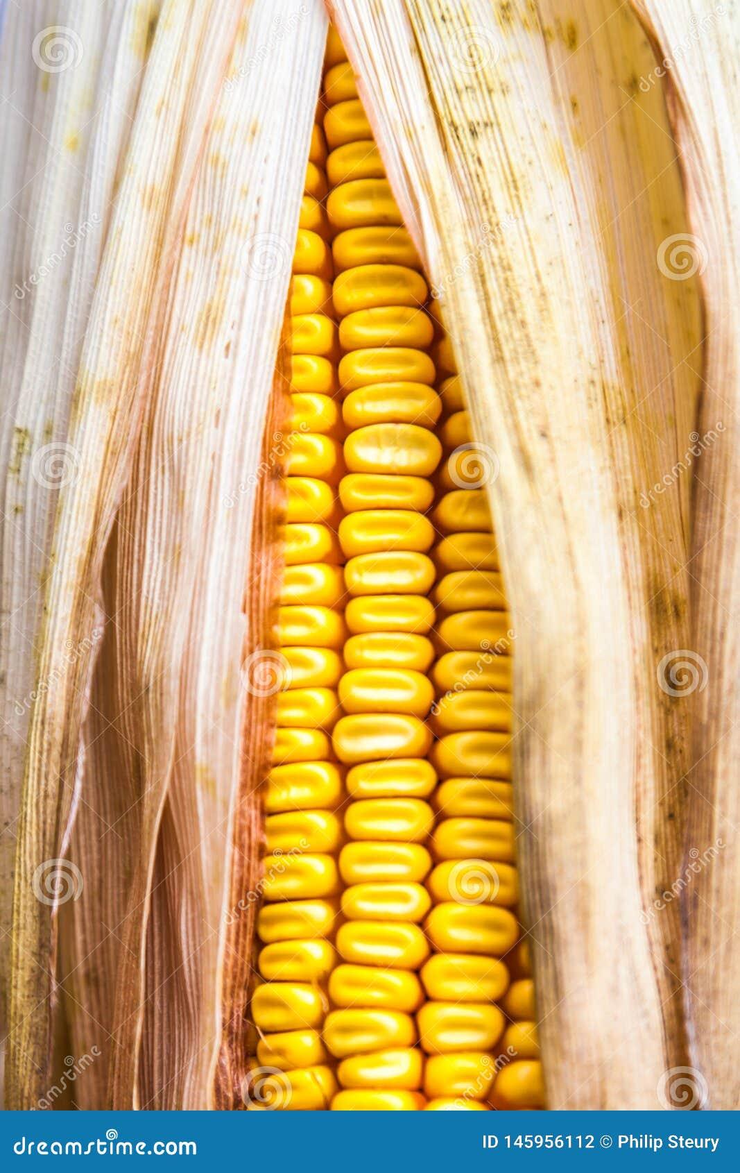 Cereale giallo grazioso