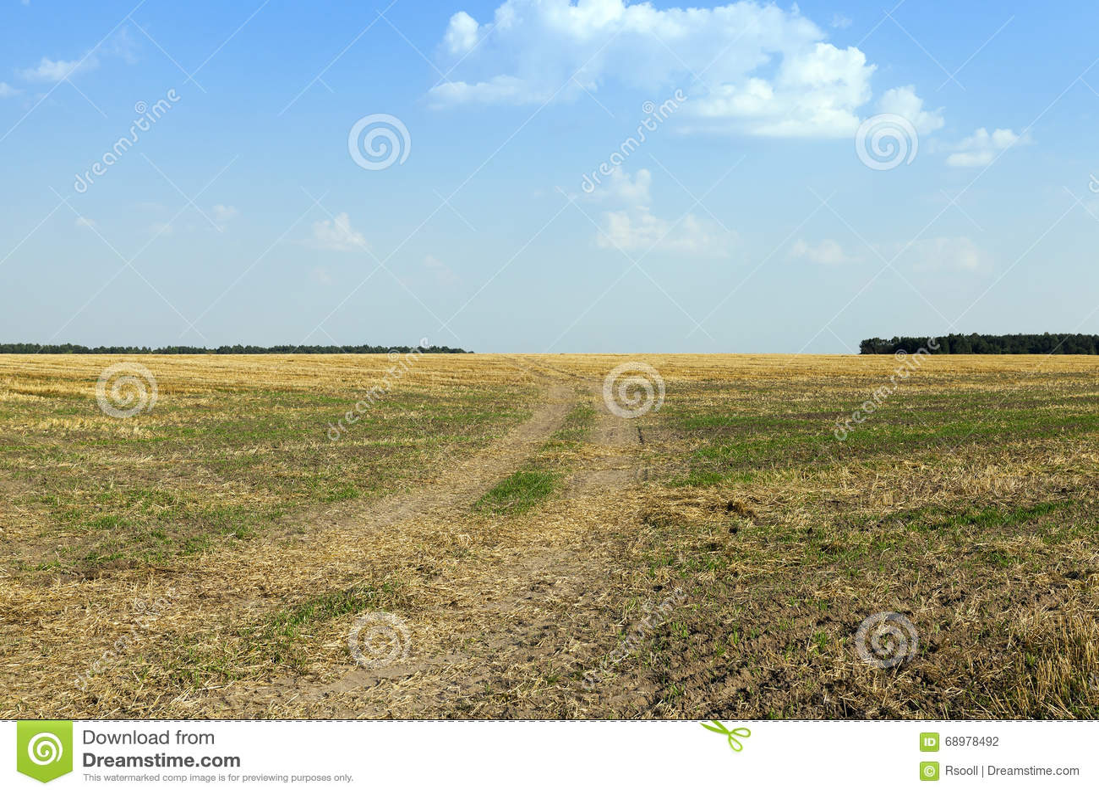 Cereales del campo de granja
