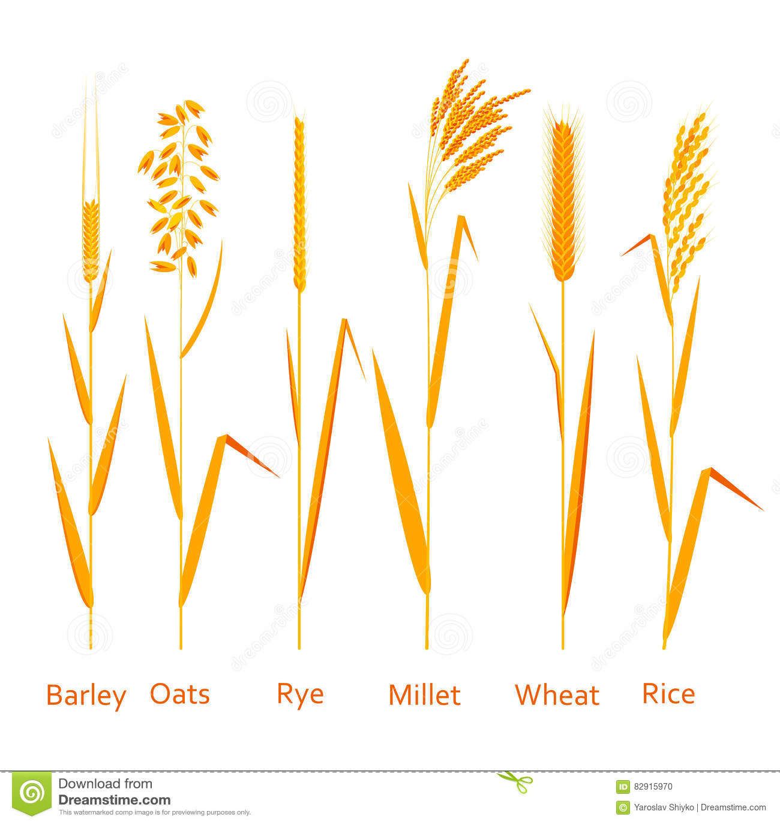 Image source plantsam com - Carbohydrates Cereals Colorful Illustration Plants Set Sources