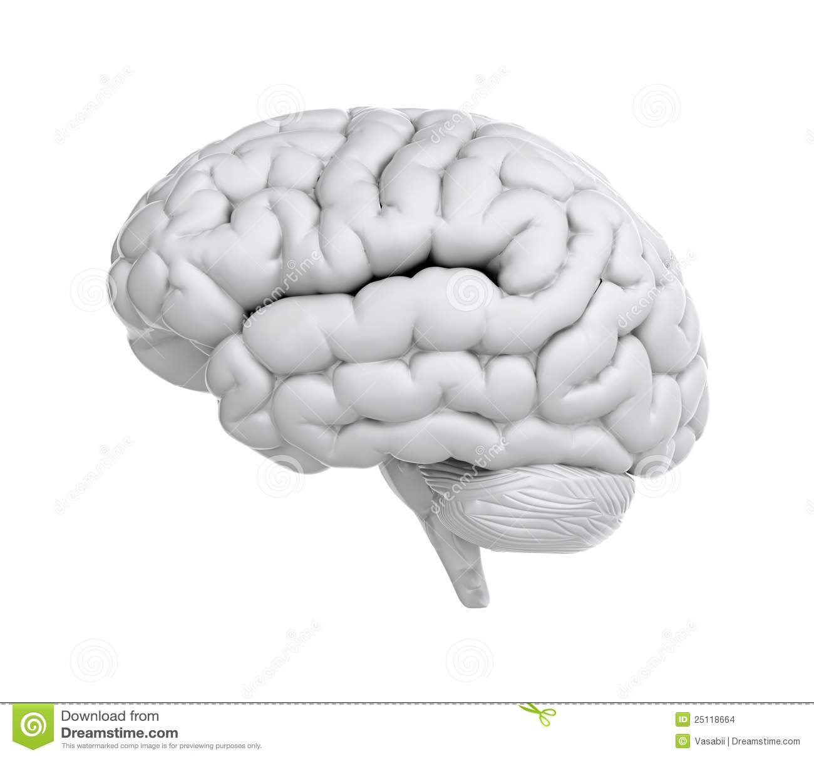 Cerebro blanco