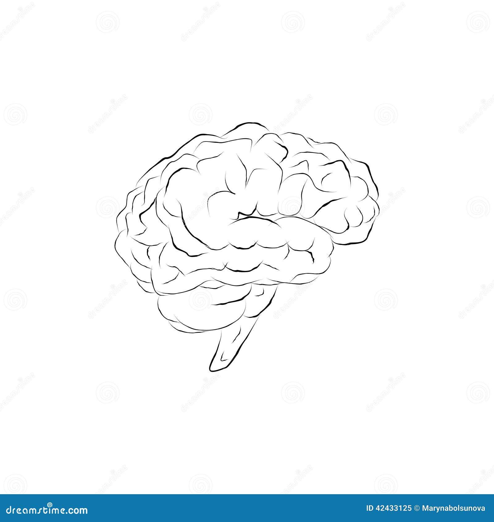 Cerebro del garabato