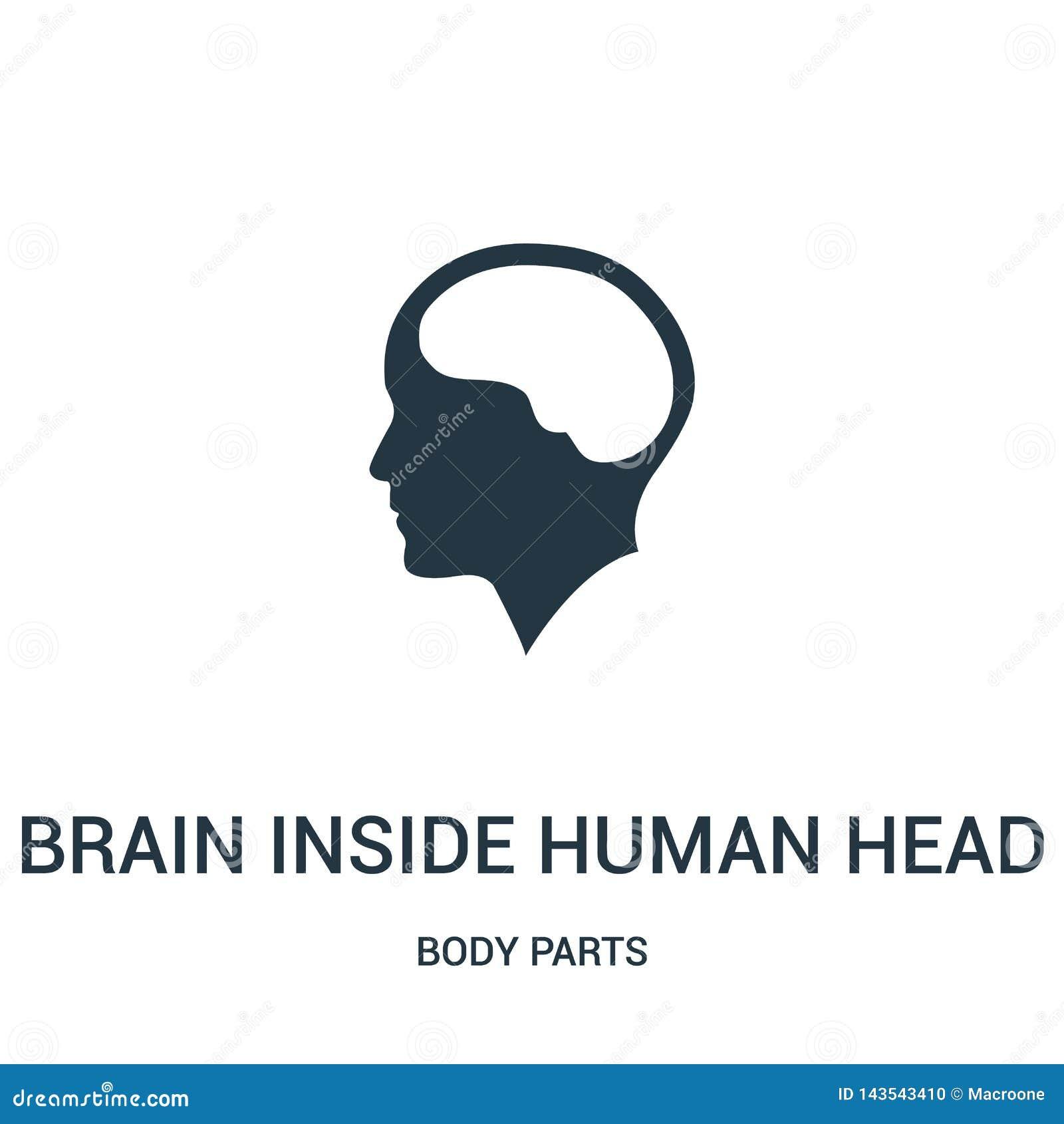 Cerebro dentro del vector principal humano del icono de la colección de las partes del cuerpo Línea fina cerebro dentro del ejemp