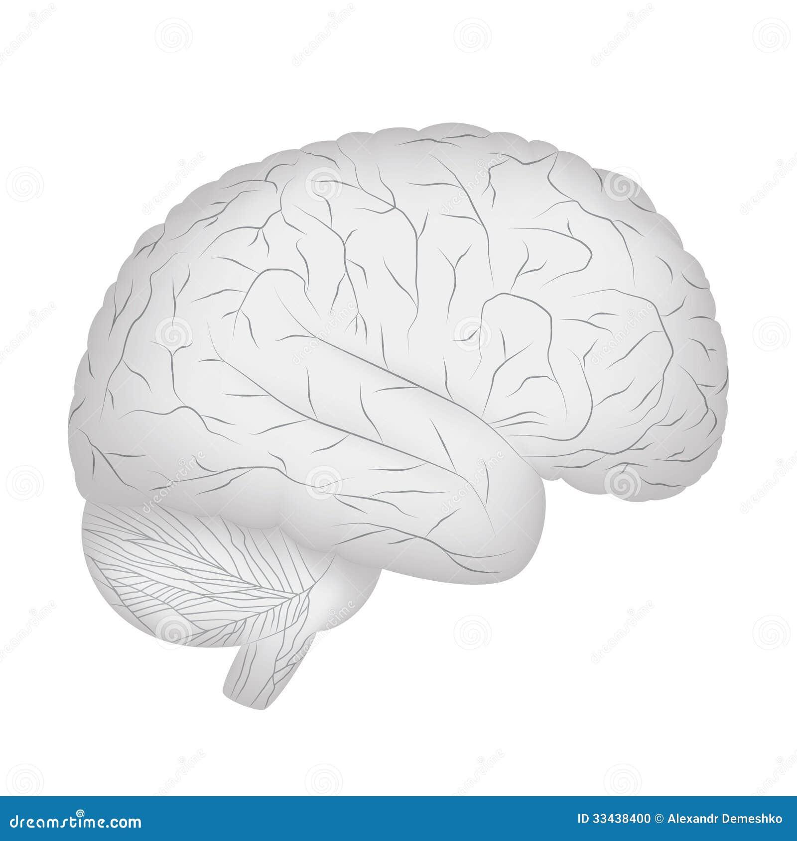 Cerebro humano gris. ilustración del vector. Ilustración de anatomía ...