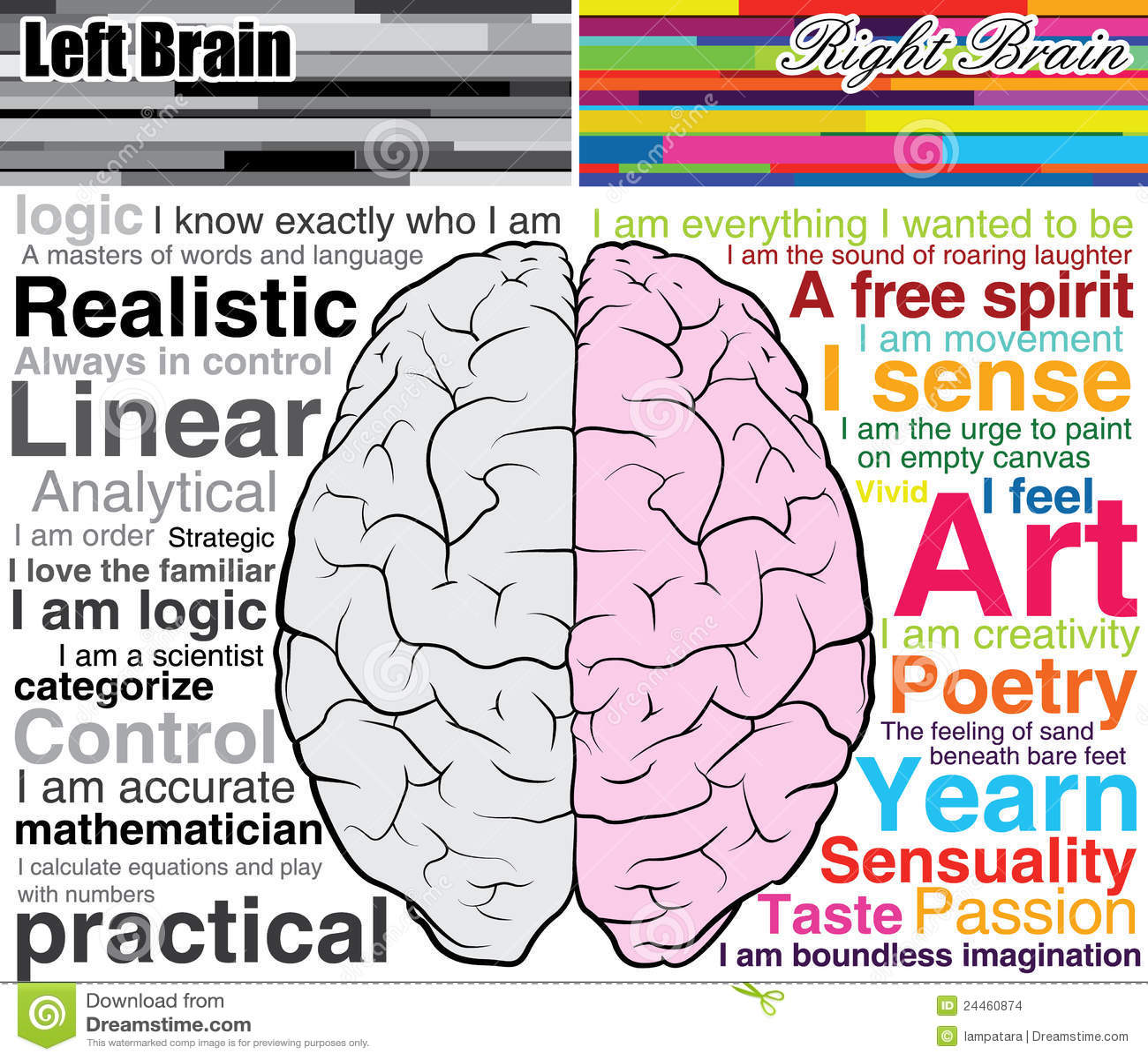 Cerebro humano izquierdo y derecho, cuáles usted es