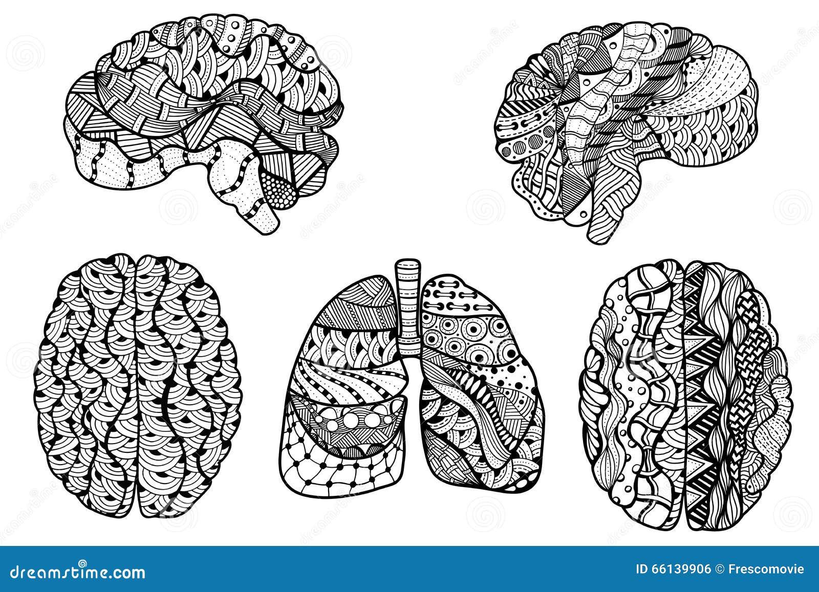 Magnífico El Libro De Colorear Del Cerebro Humano Colección de ...