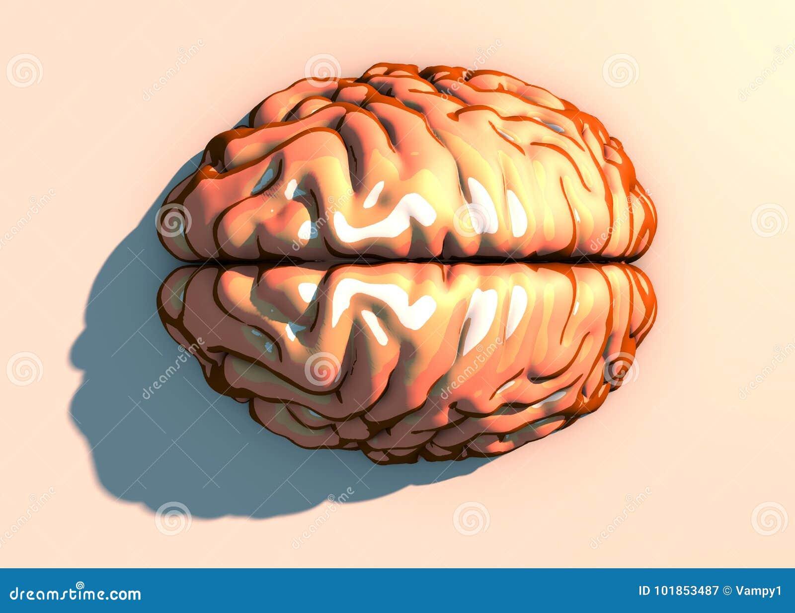 Circuito Neuronal : Cerebro neuronas sinapsis circuito de neuronas enfermedades