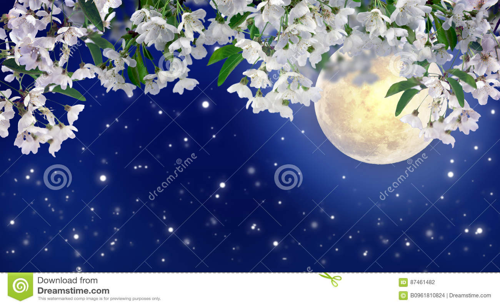 Cereja de florescência no luar Noite da mola mystic MOO completo