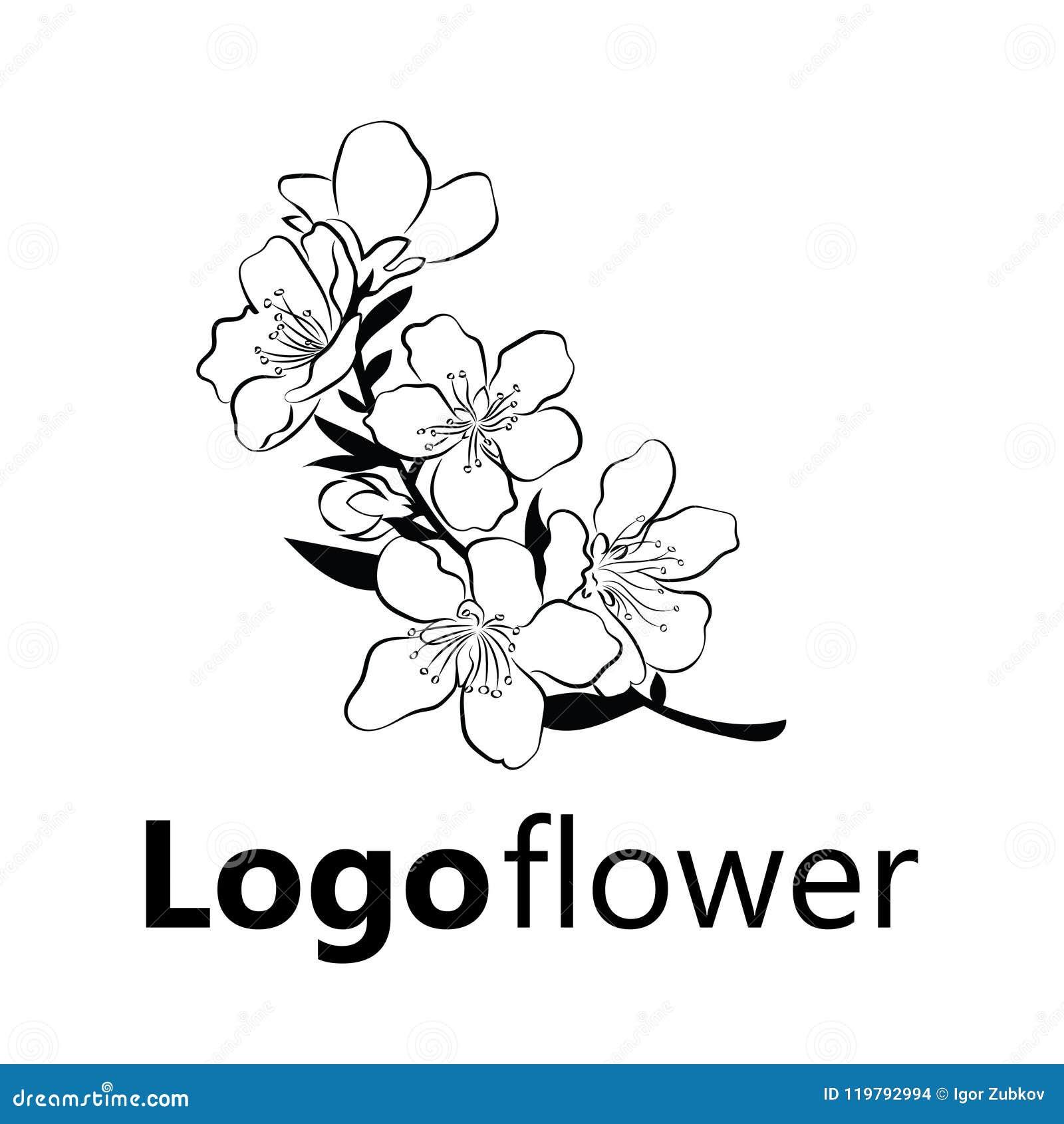 Cereja De Florescencia Ramo De Sakura Com Flores Em Botao Desenho