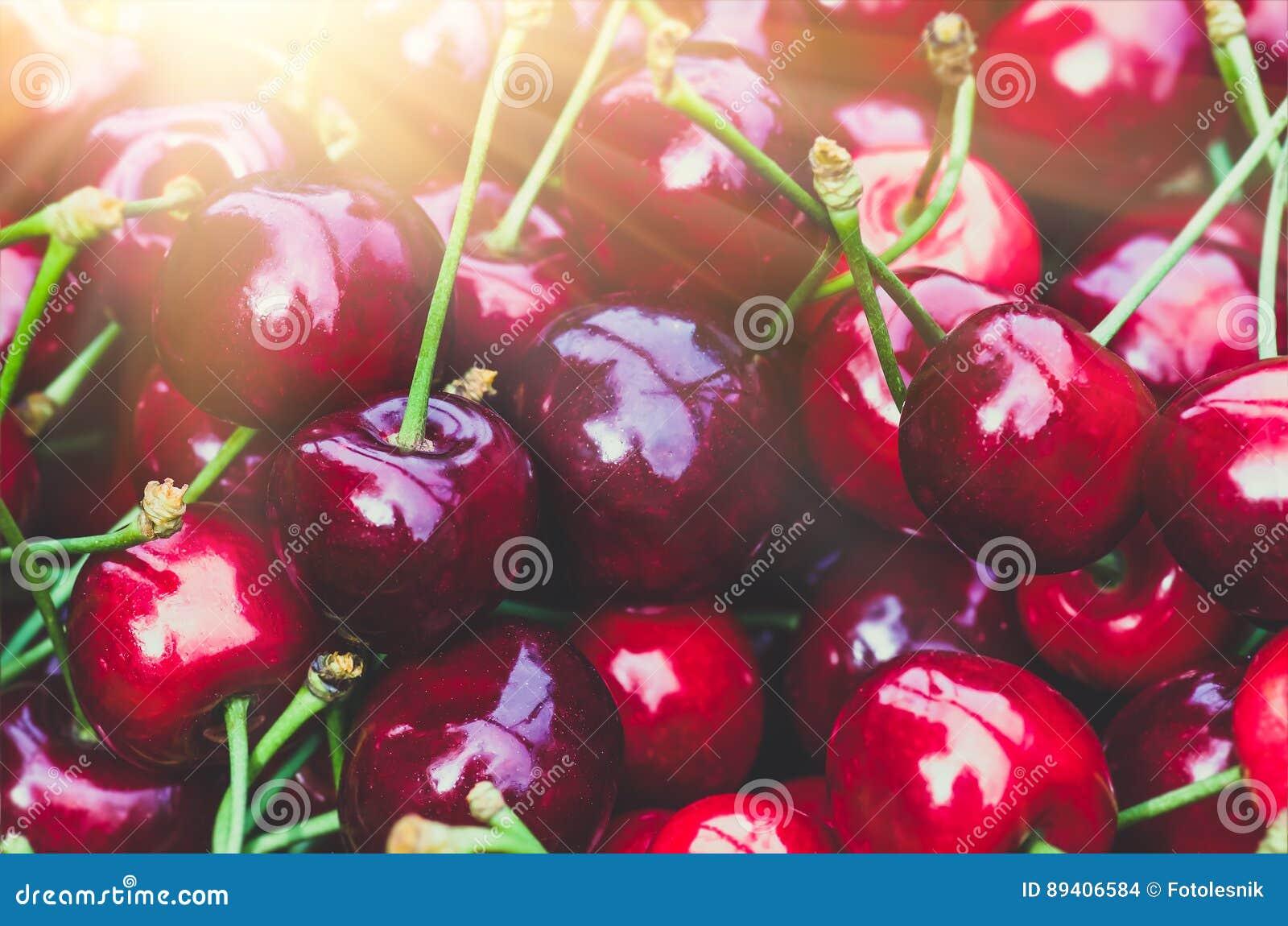 Cereja doce vermelha madura Fundo agricultural