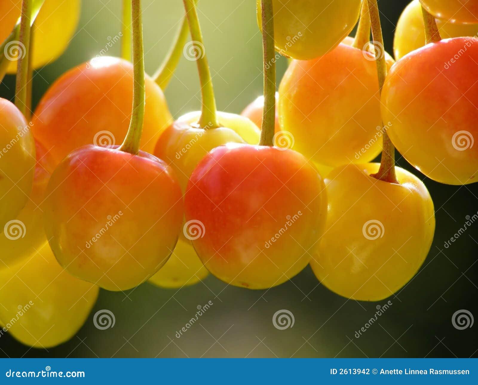 Cerejas amarelas e vermelhas