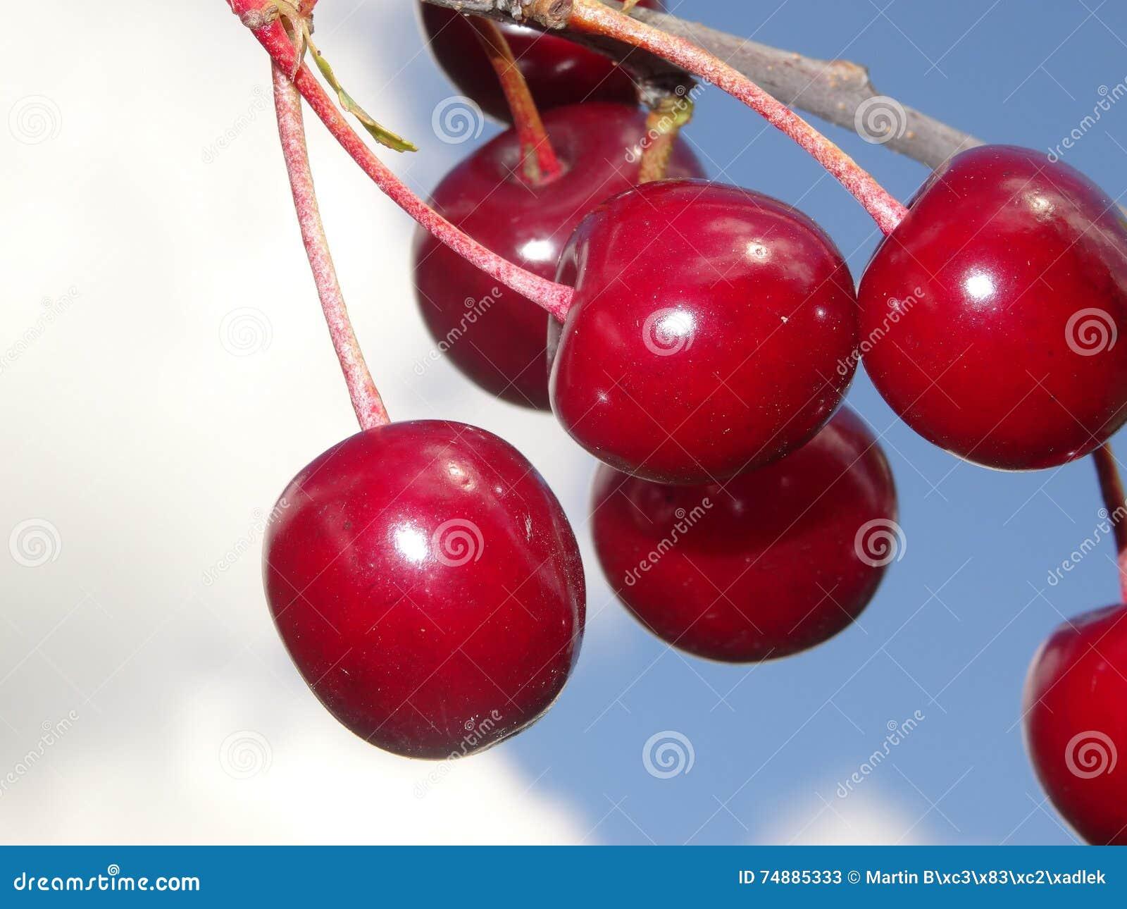 Cerejas vermelhas