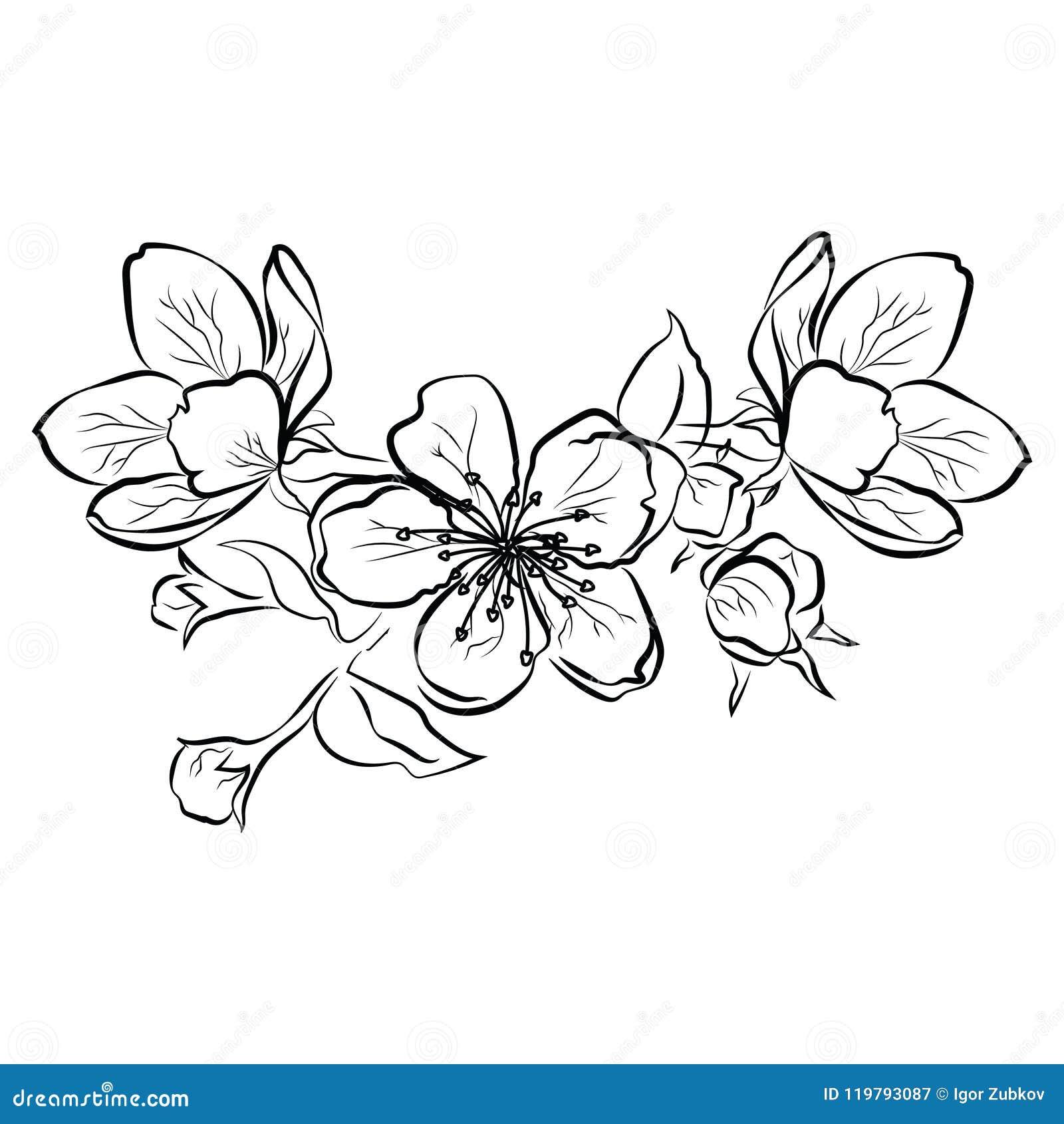 Ilustración De Flor De Cerezo Rama De Sakura Con Brotes De Flor