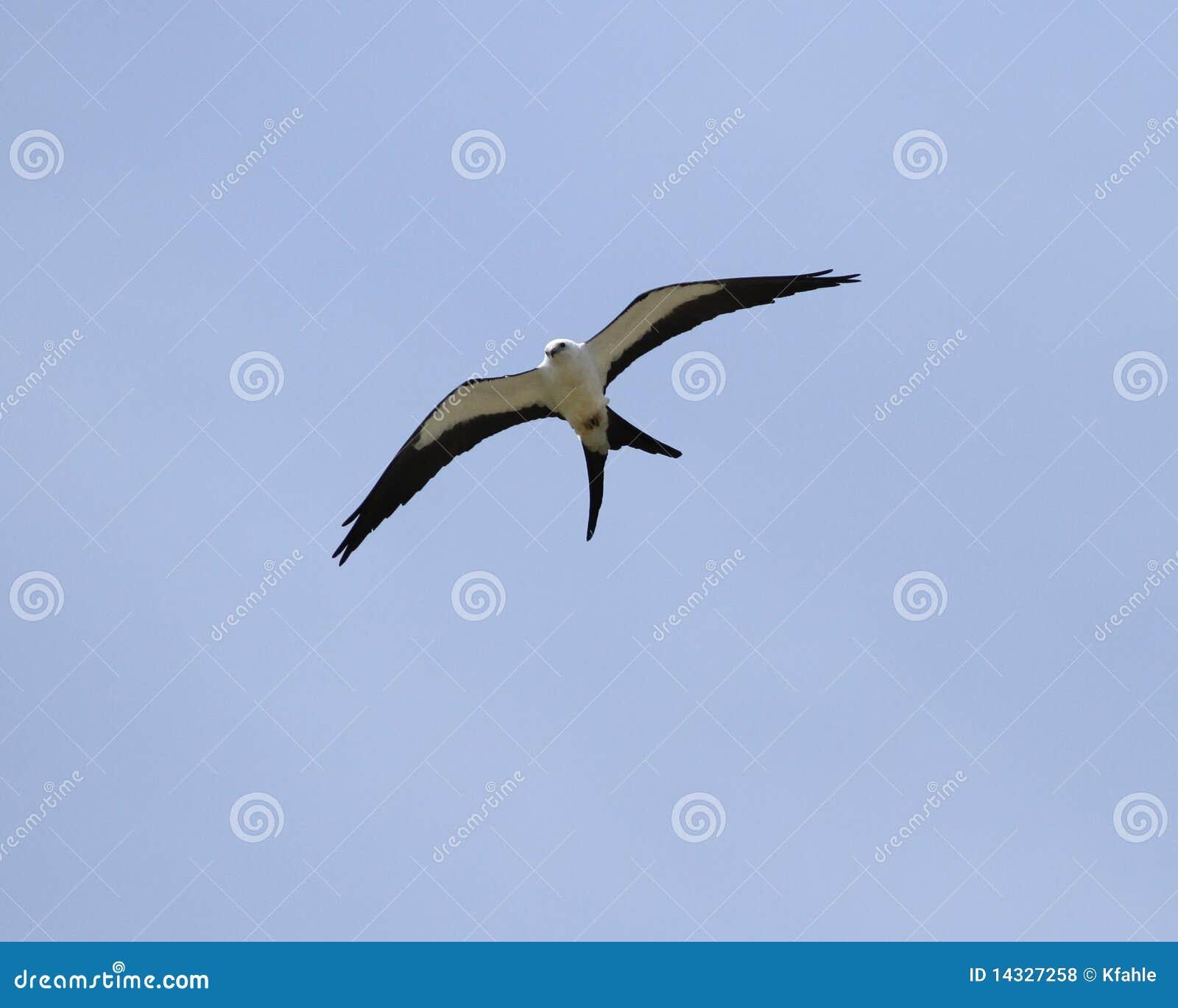 Cerf-volant d arrière d hirondelle