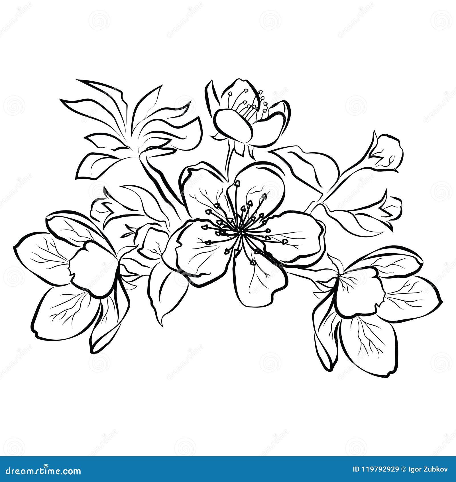 Cerise De Floraison Branche De Sakura Avec Des Bourgeon Floraux