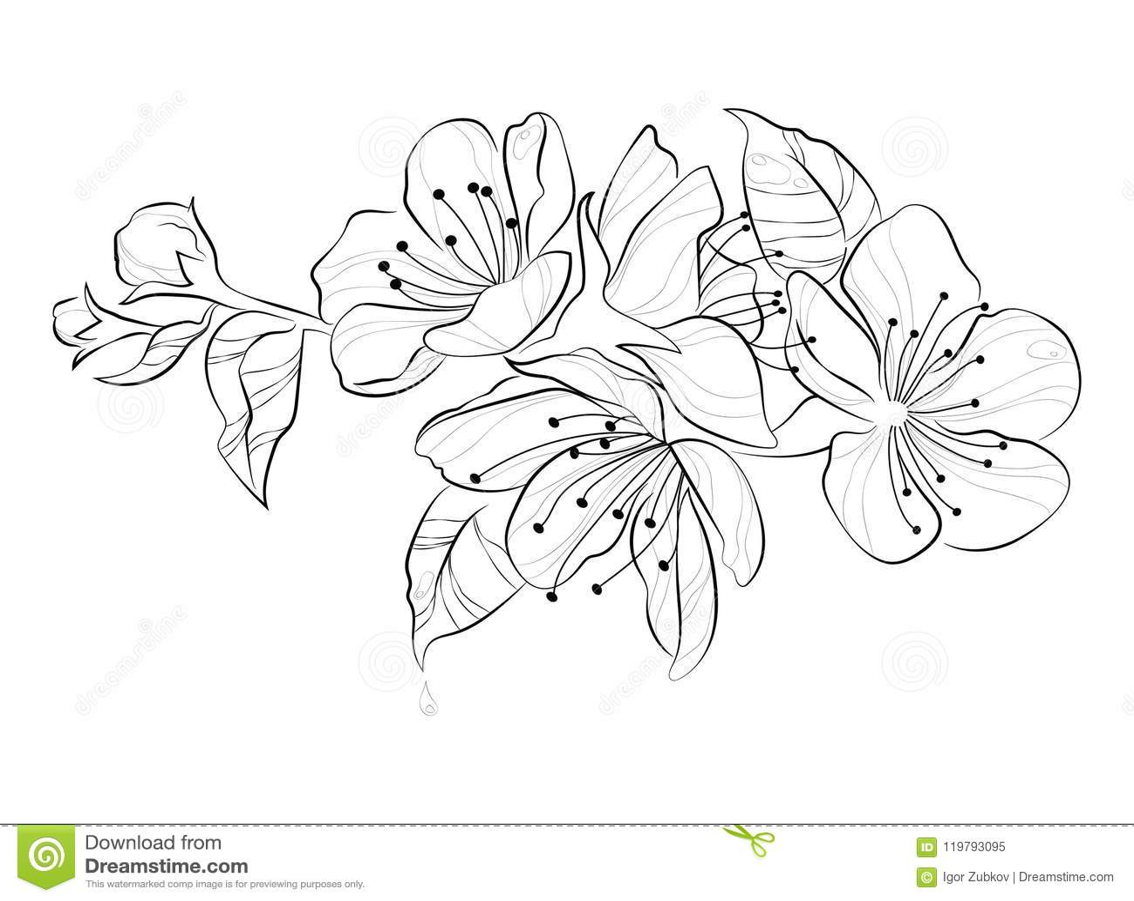 Cerise De Floraison Branche De Sakura Avec Des Bourgeon
