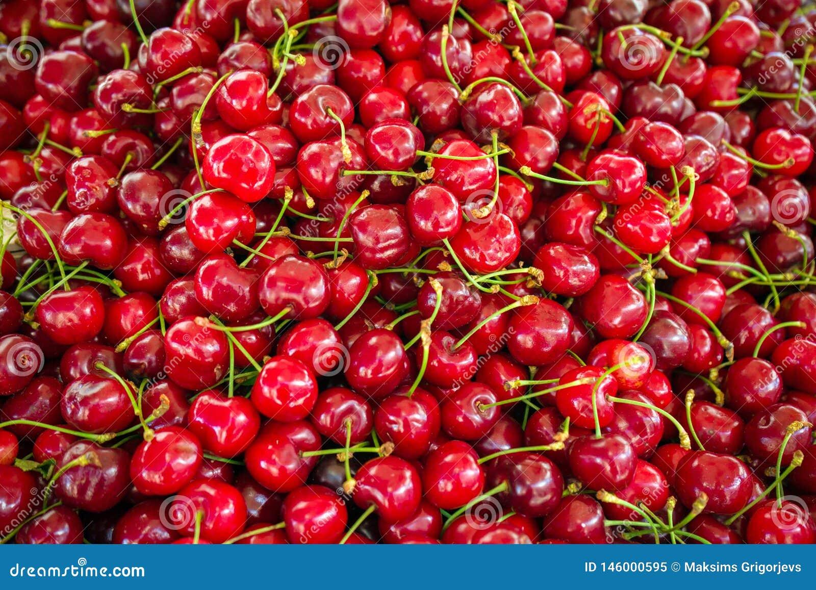 Cerises rouges avec des tiges sur le marché en plein air